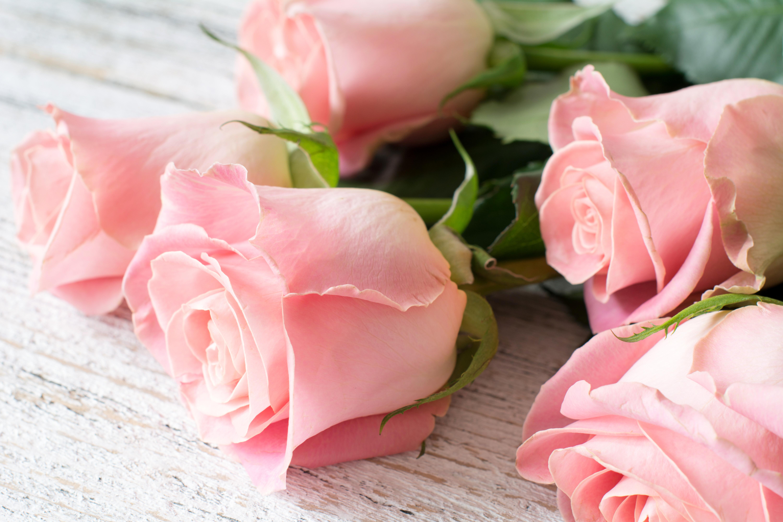 обои для раб стола розовые розы № 583767 загрузить