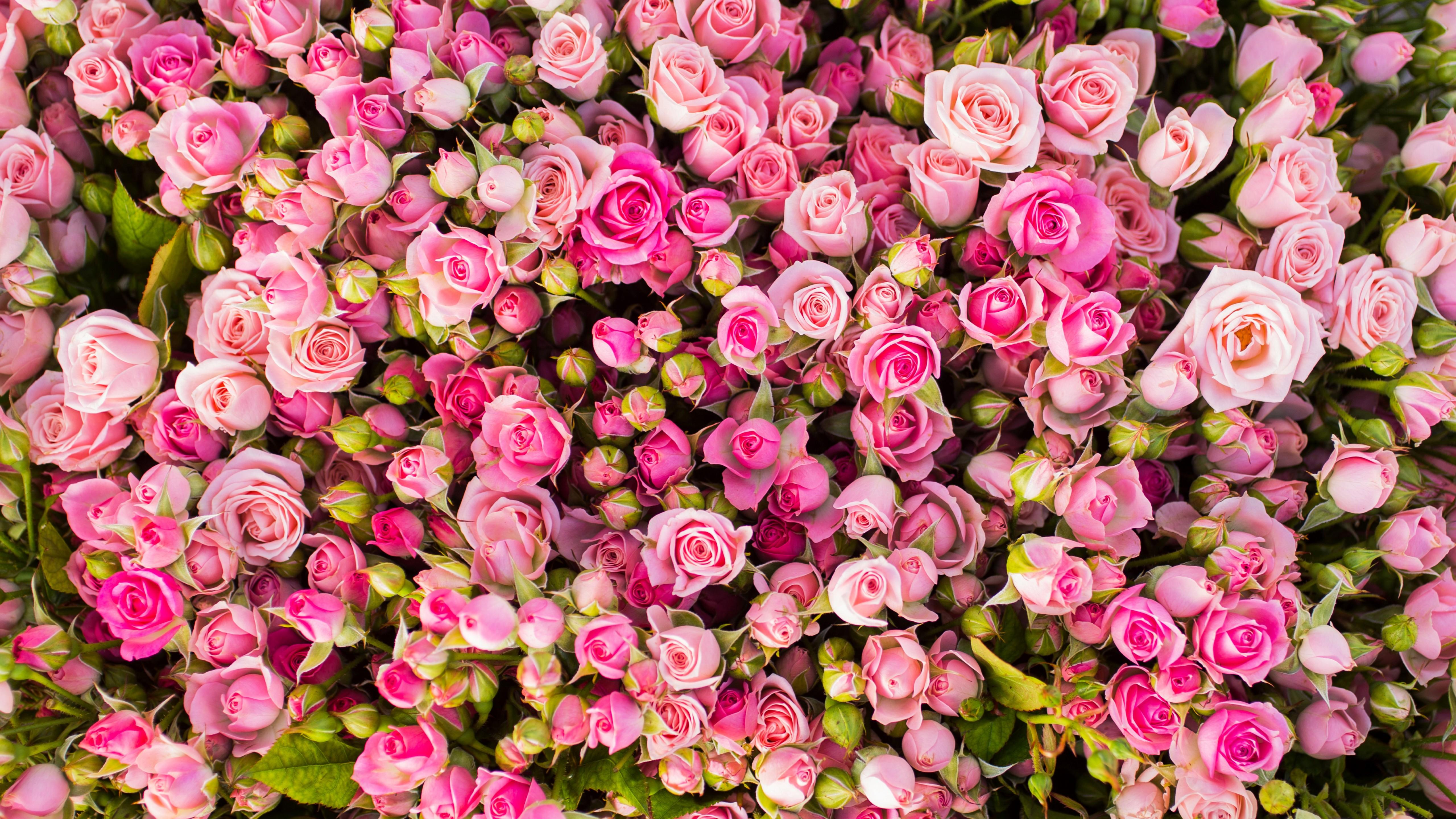 Началом, картинки цветы ютуб
