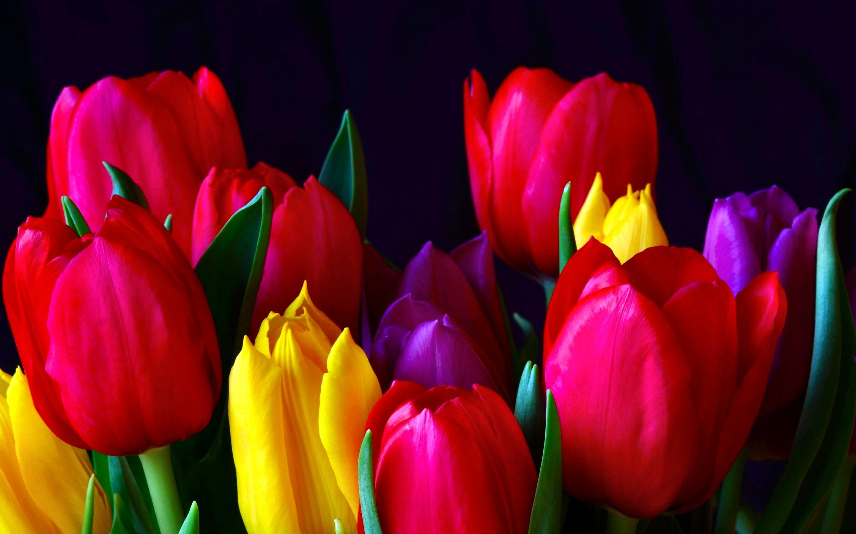 Свадьбу, фото картинки тюльпанов
