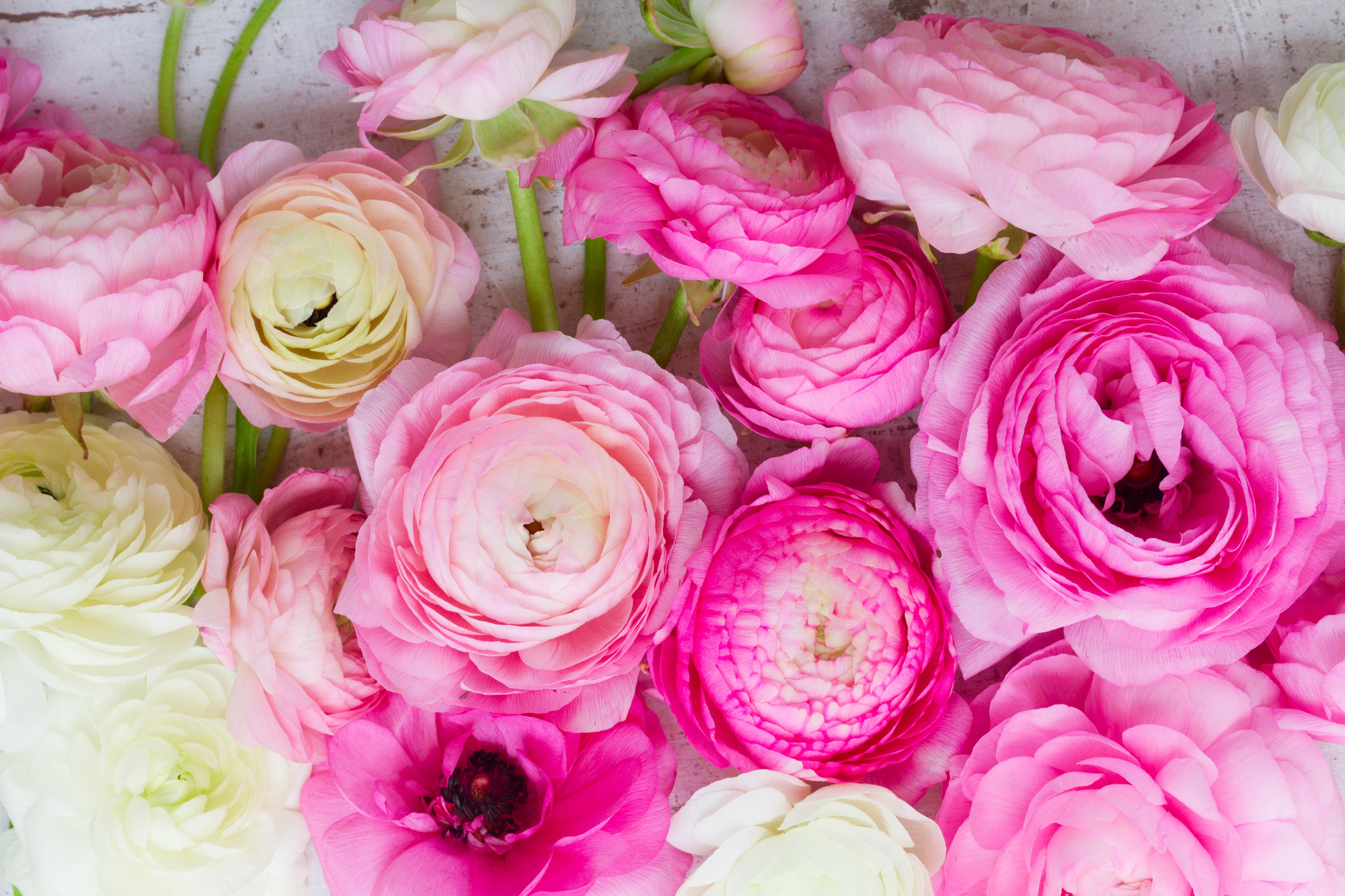 махровых цветов картинки на рабочий стол цветы лютики убеждены