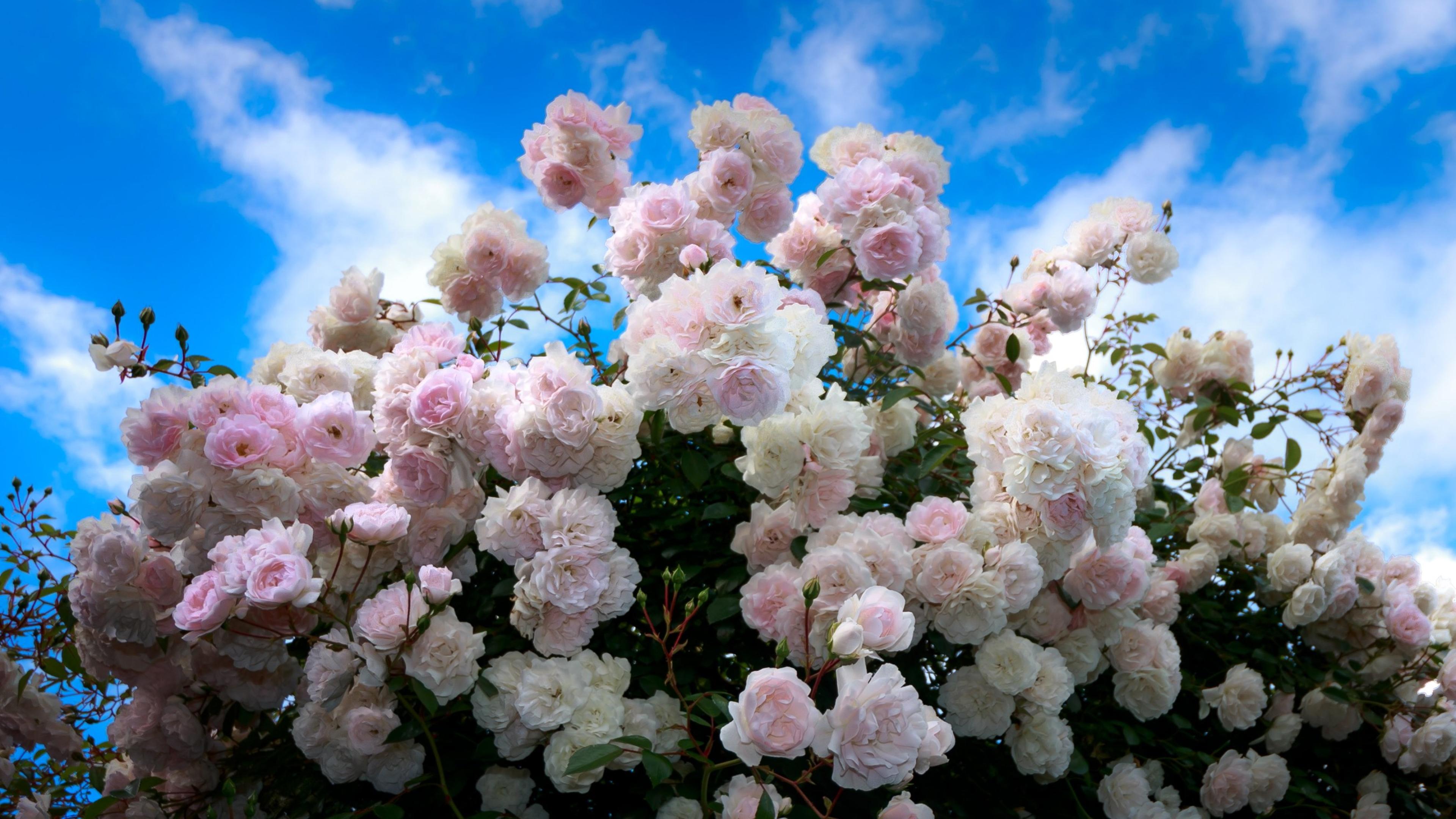 Цветы на фоне неба фото