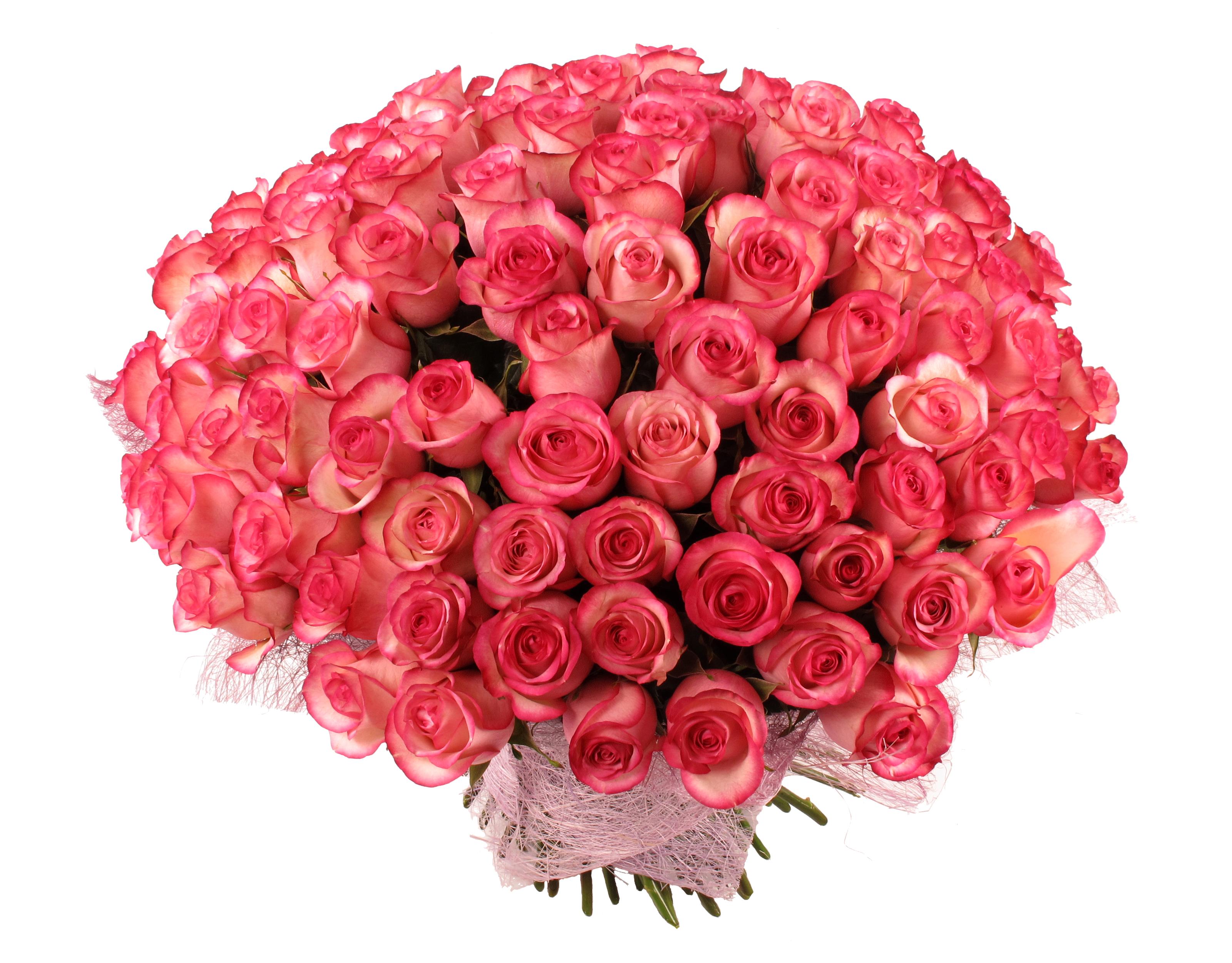 Цветы, красивый большой букет роз на прозрачном фоне
