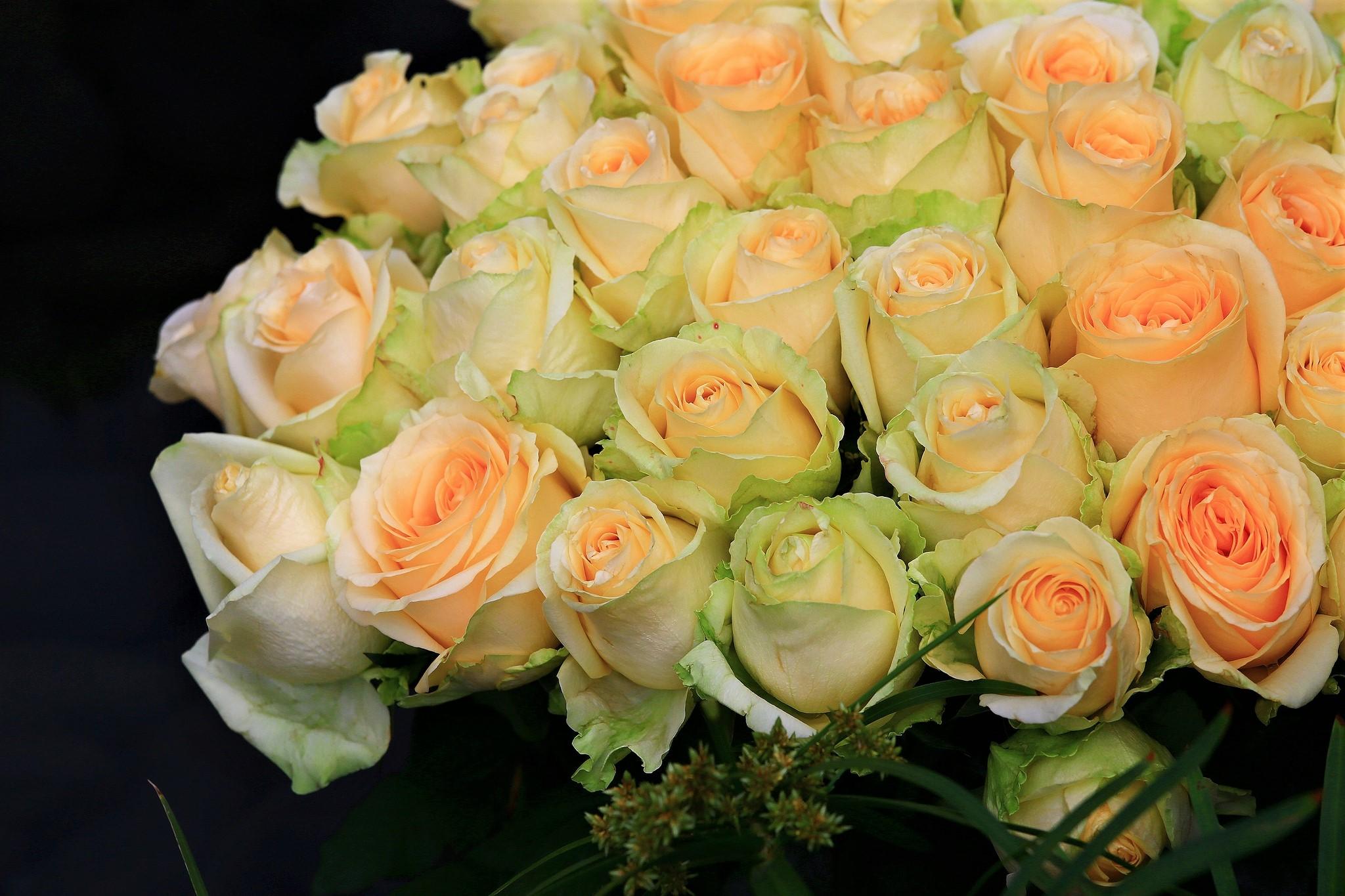 Нежные букеты роз фото, роз корзине