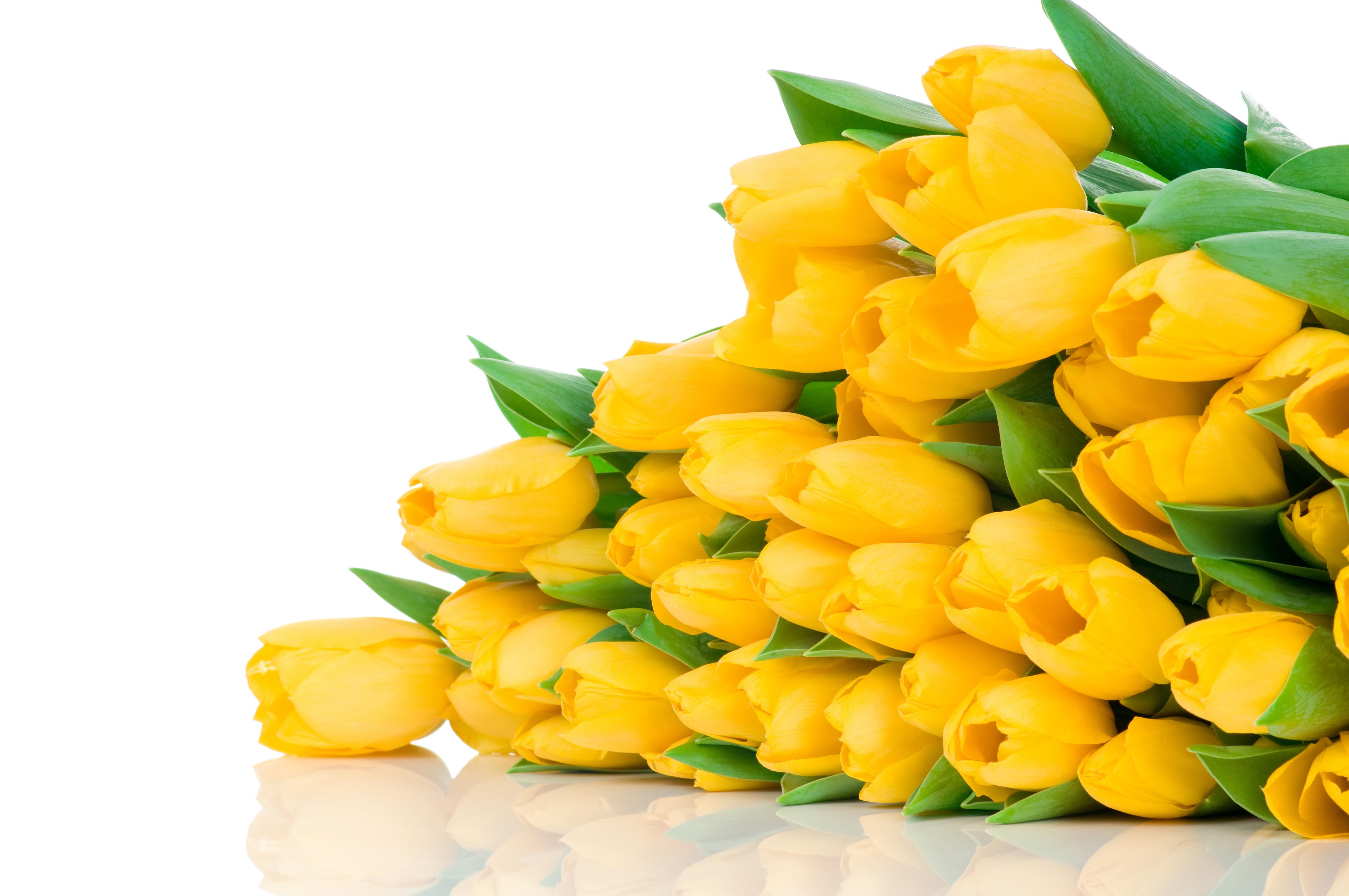 Котиков, открытки тюльпанов в хорошем качестве