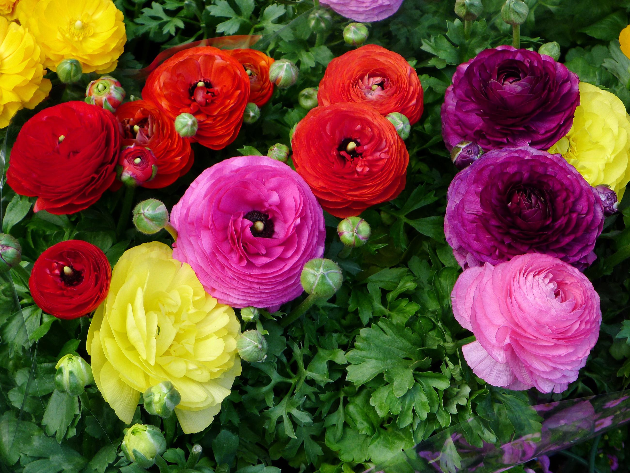 Фото всех сортов цветов