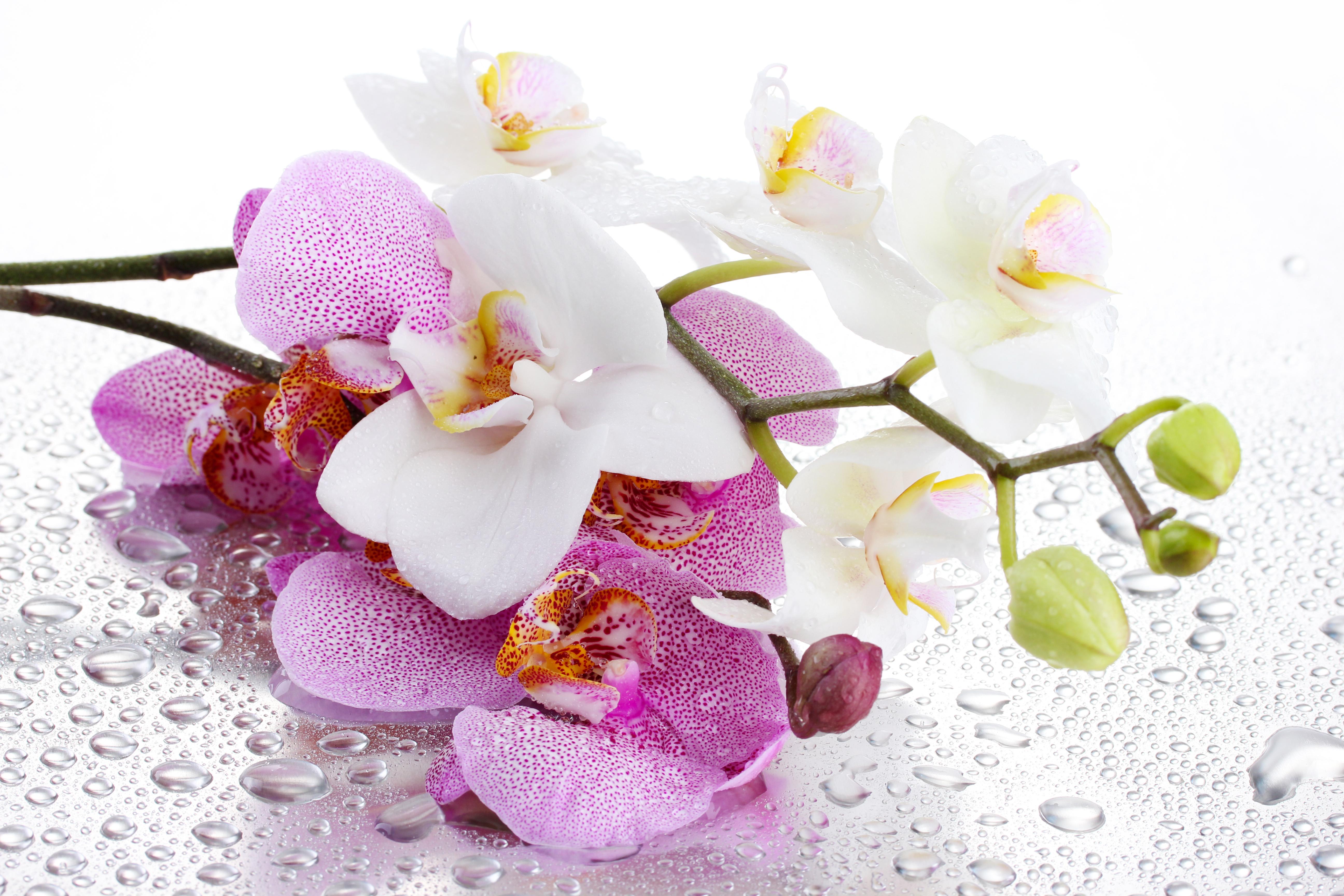 открытка с белыми орхидеями бумаги делаем вырезку