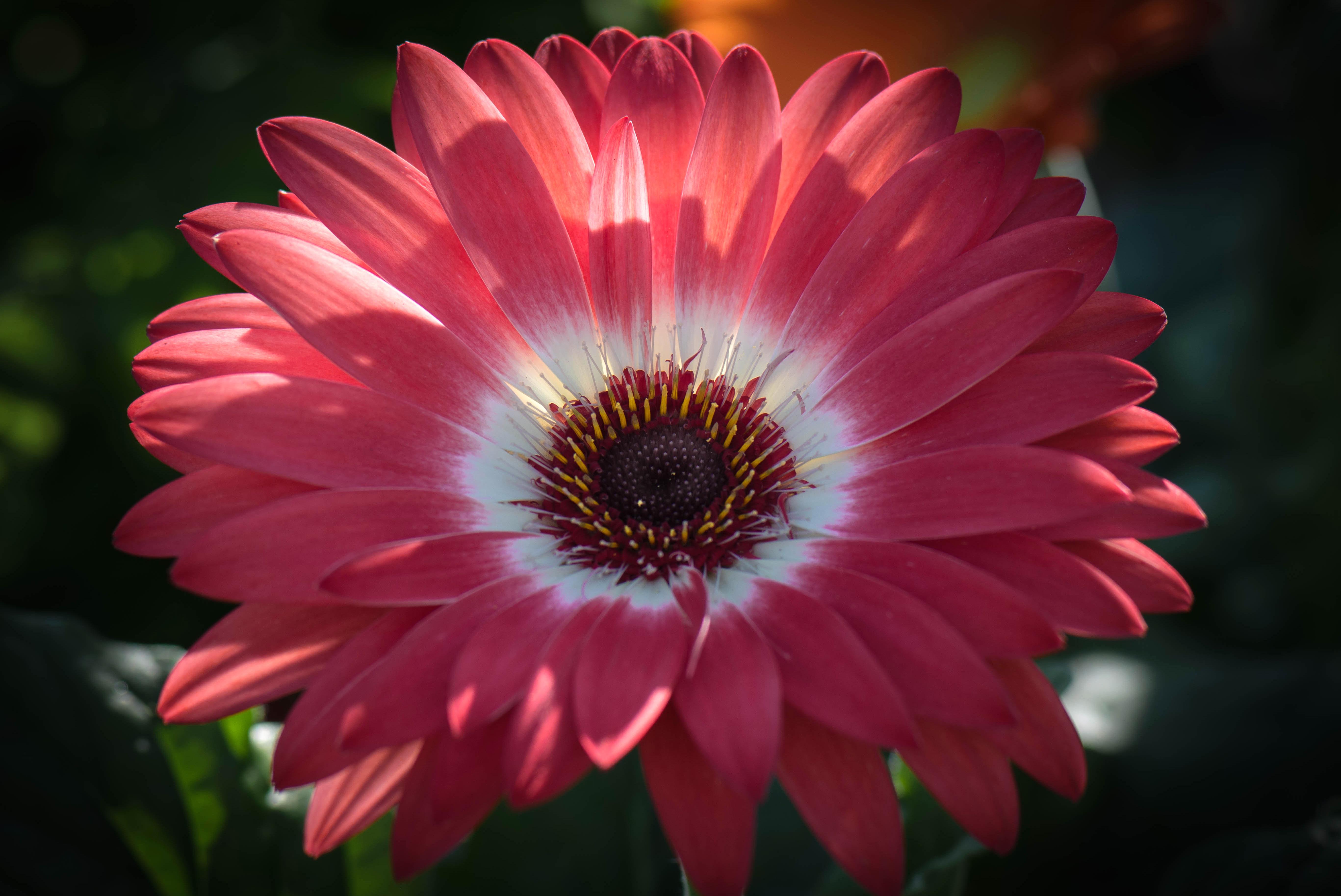 цветы крупным планом в хорошем разрешении фото такие