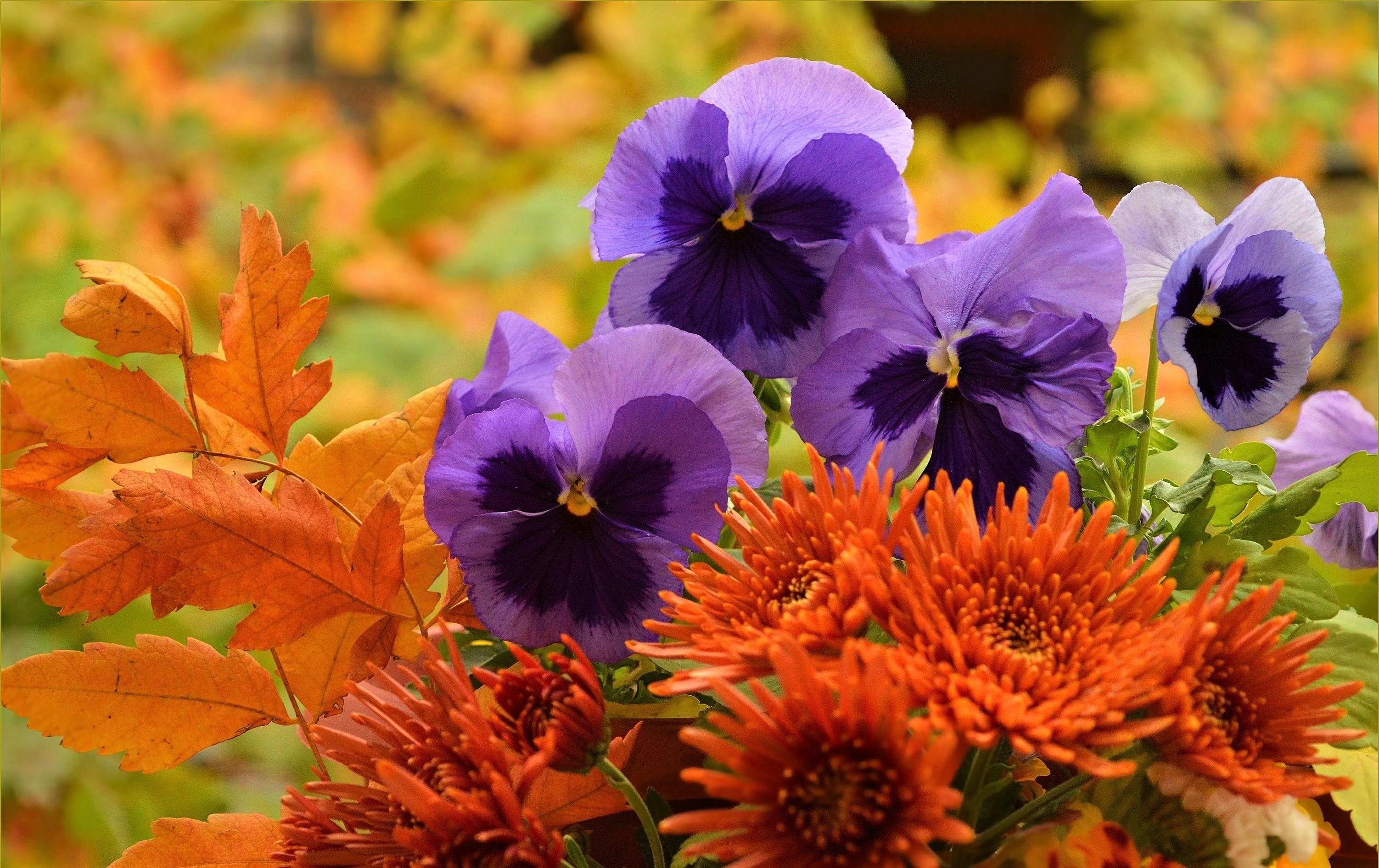 Картинки осень цветы на рабочий стол, девочки лет днем
