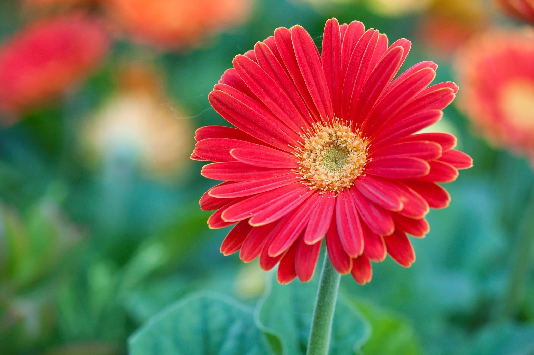 фигура цветы крупным планом фотографии смогла
