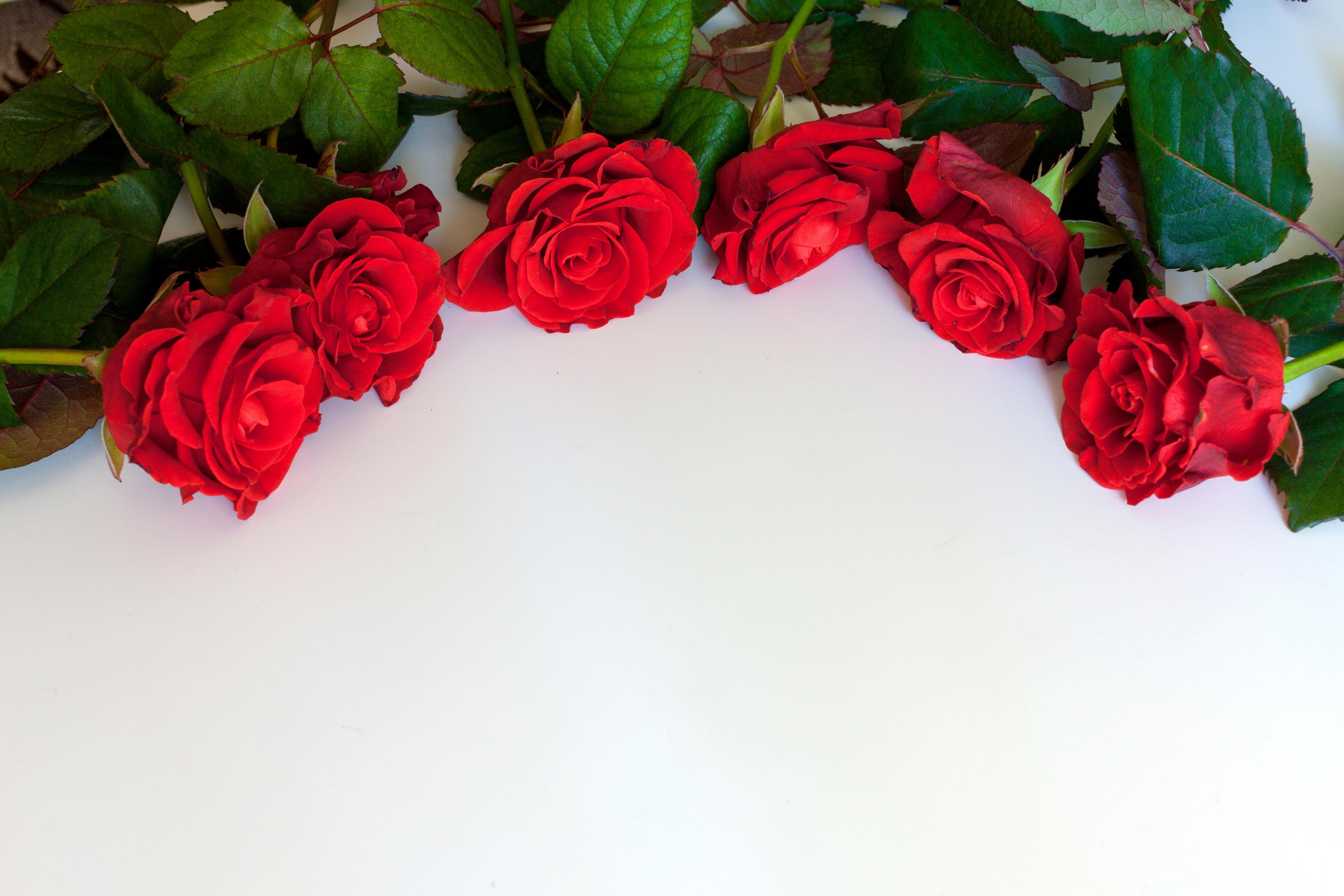 Милой подруге, открытка цветов розы