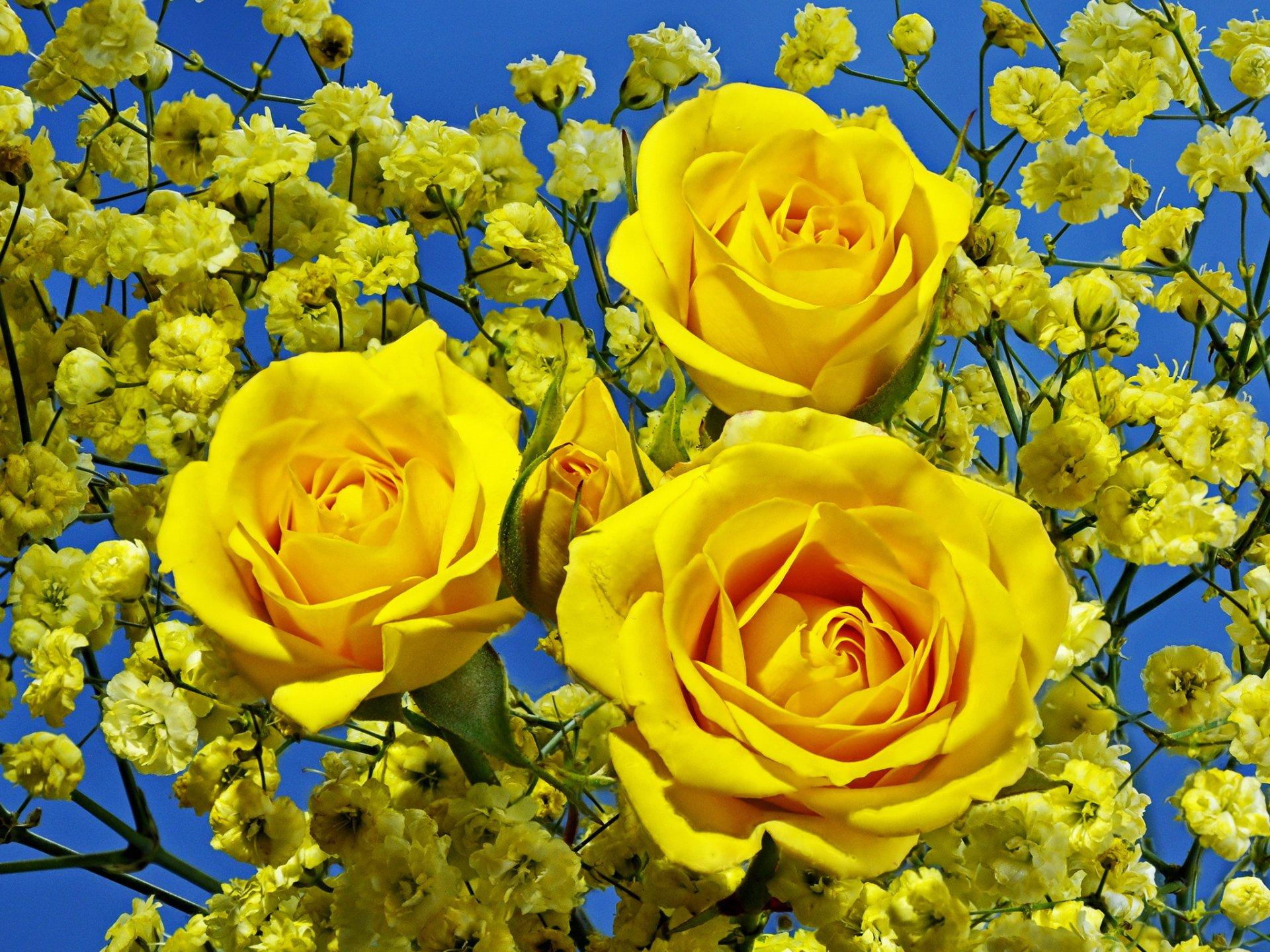 картинки с желтыми цветами морскую пехоту