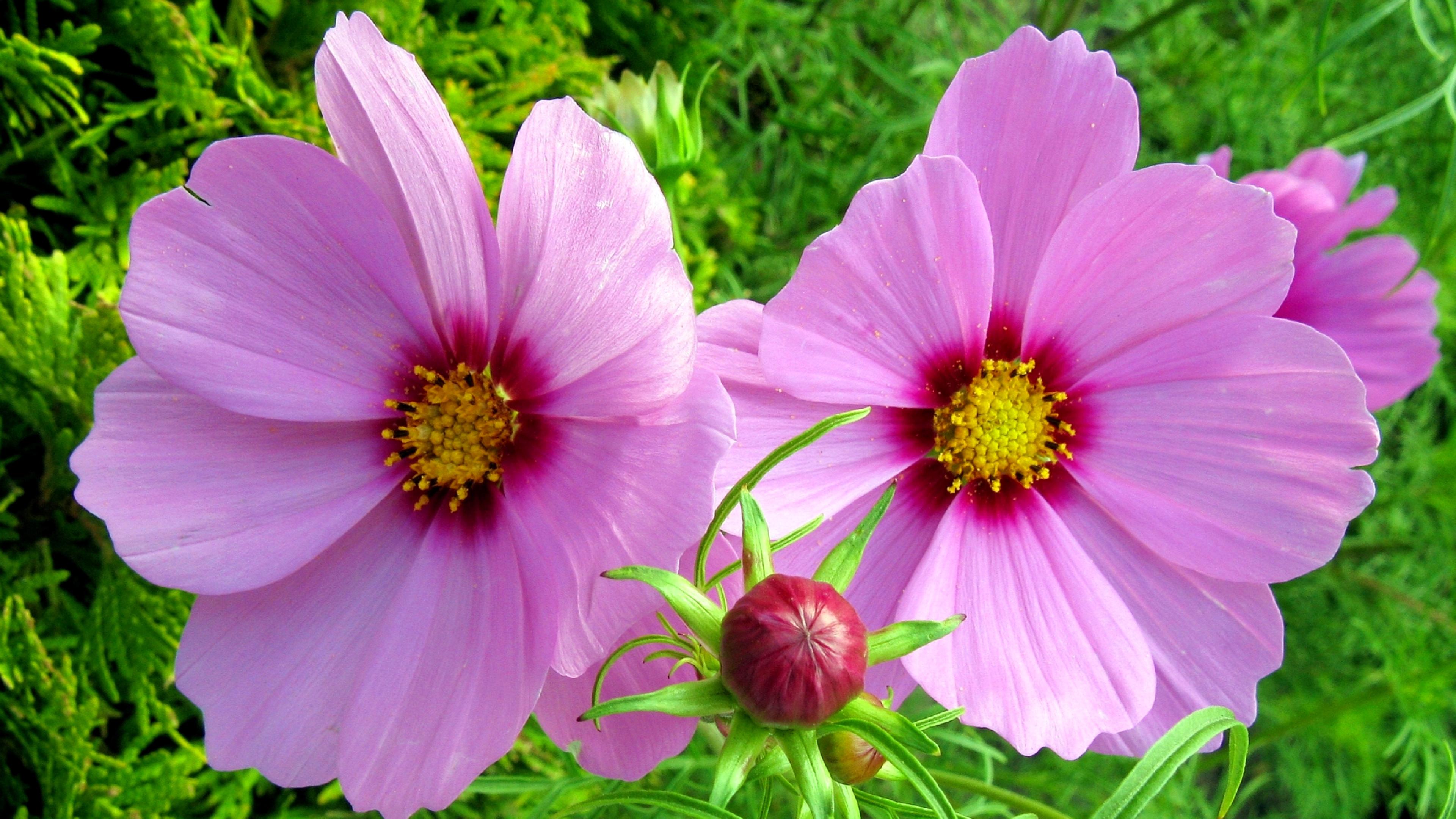 картинки для рабочего стола садовые цветы поздравления