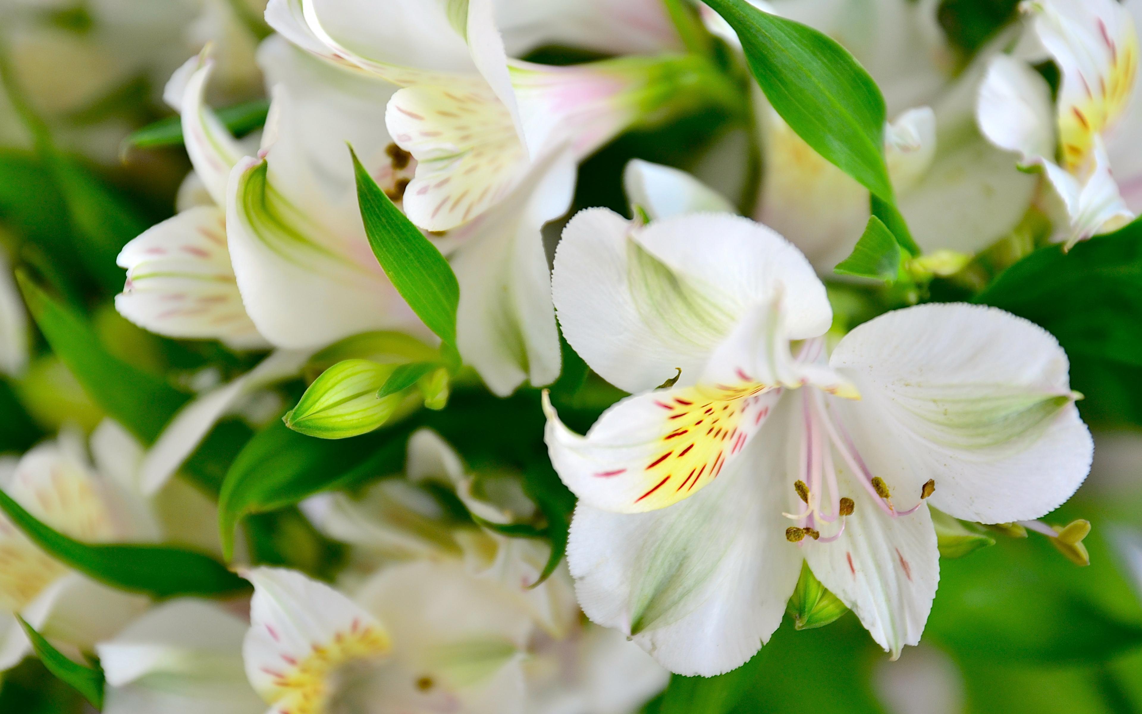картинки цветы белого цвета личной жизни маши