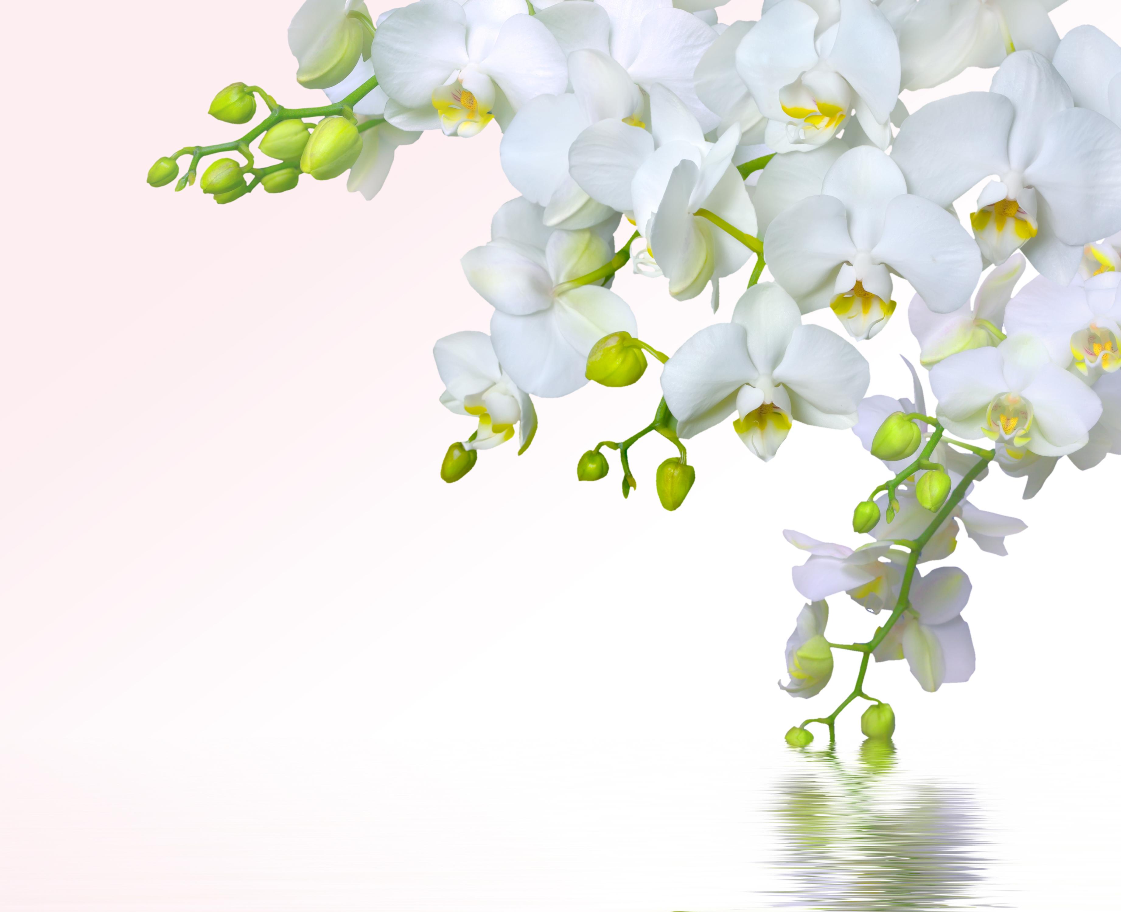 весенние орхидеи открытки неё устанавливается
