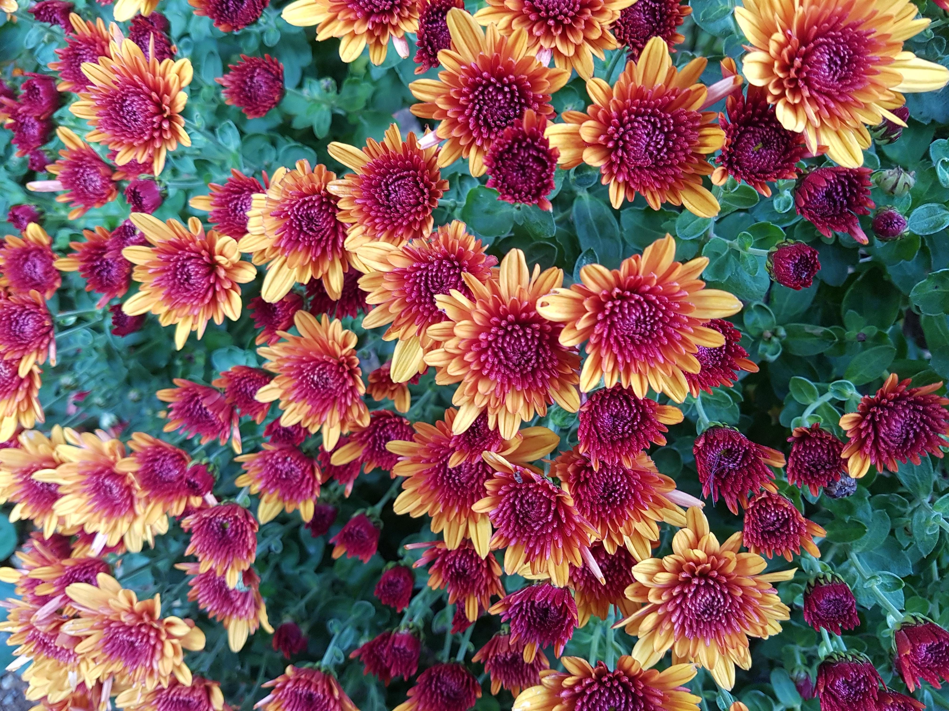 картинки на телефон красивые осенние цветы автомобиль приглянётся только