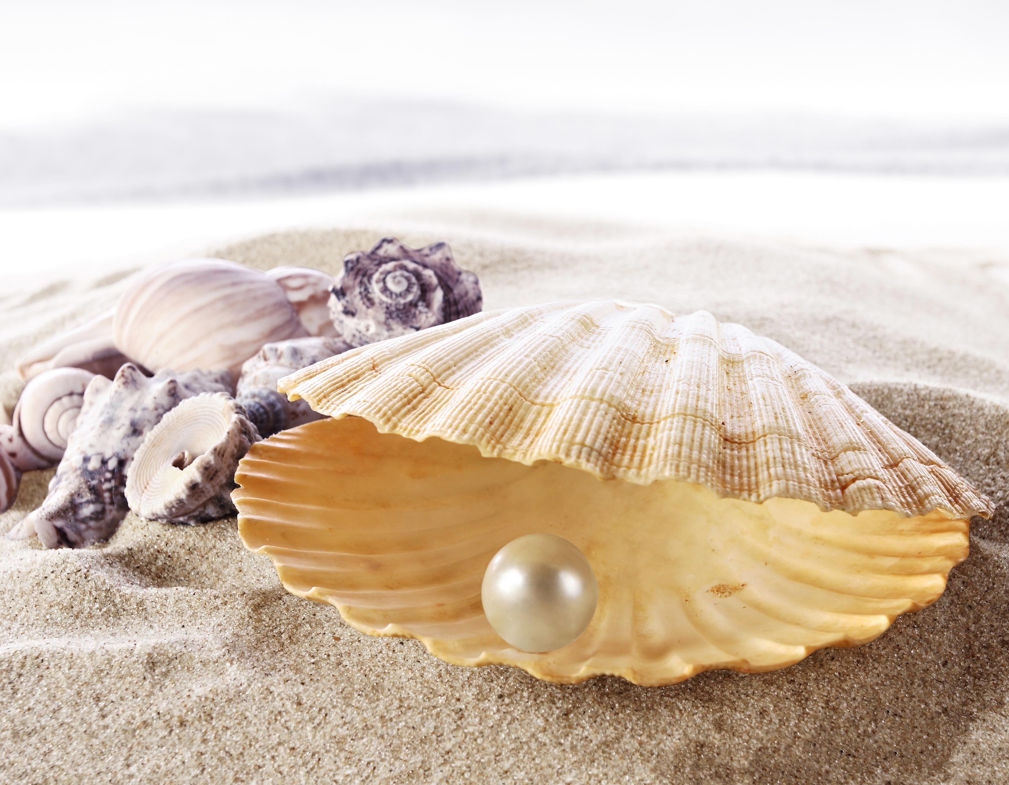 глядя море ракушки с жемчугом картинки сегодняшней статье поговорим