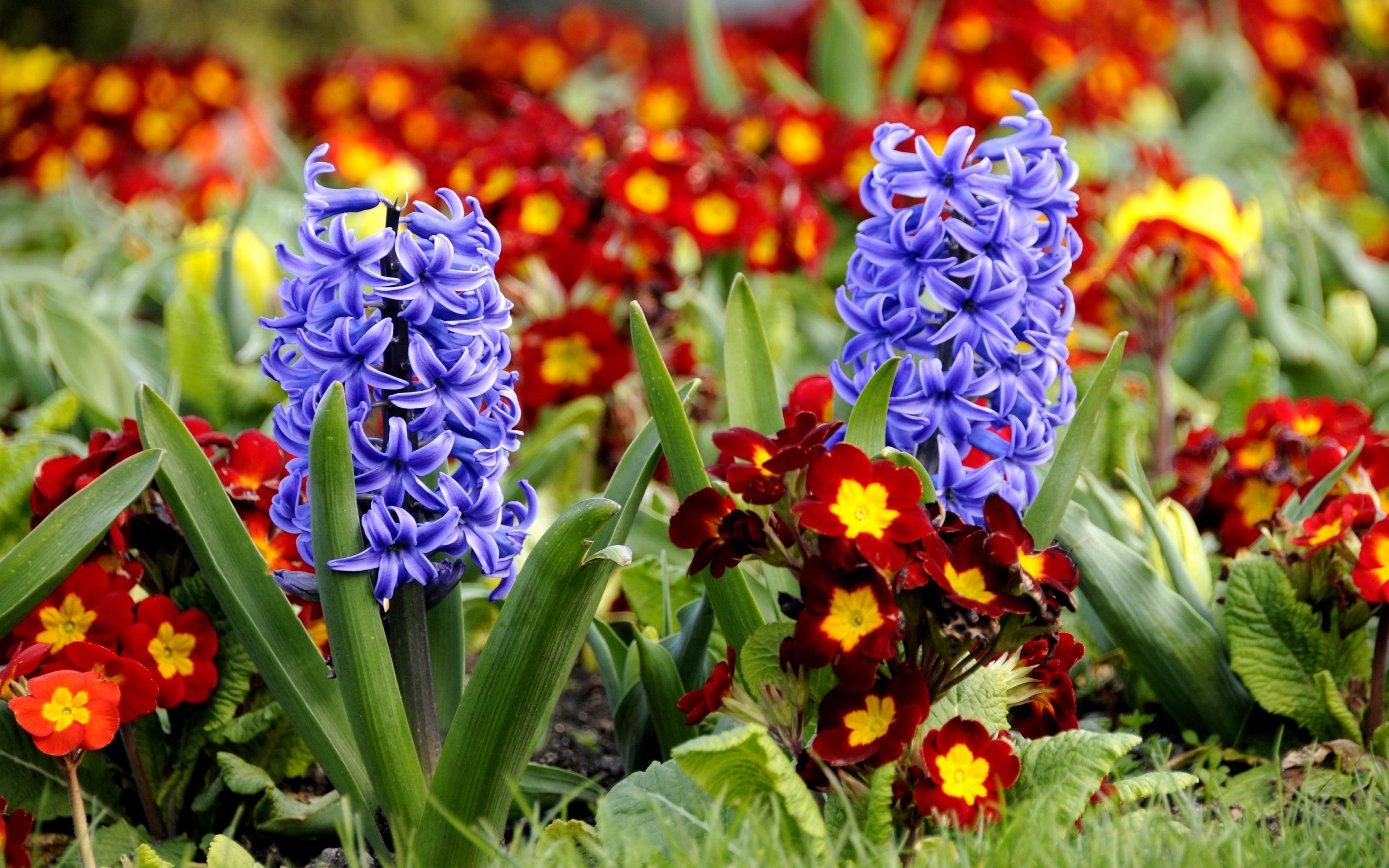 красивые букеты весенних цветов обои на рабочий стол