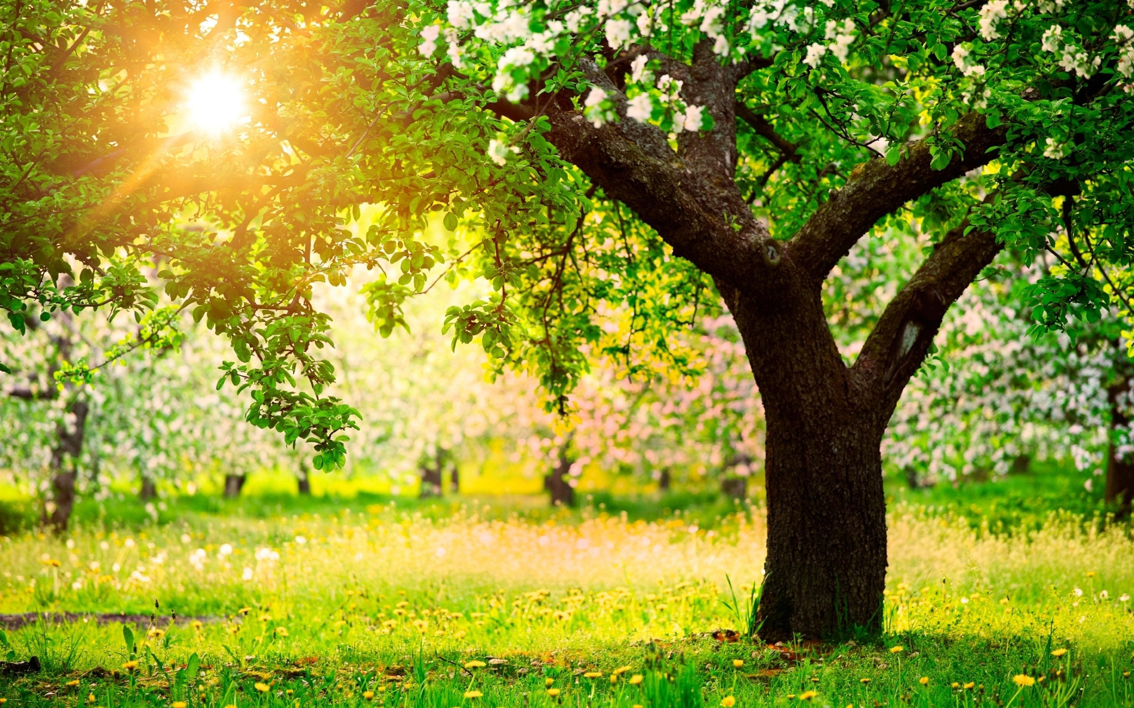 Поздравления, красивая открытка природы солнце весна