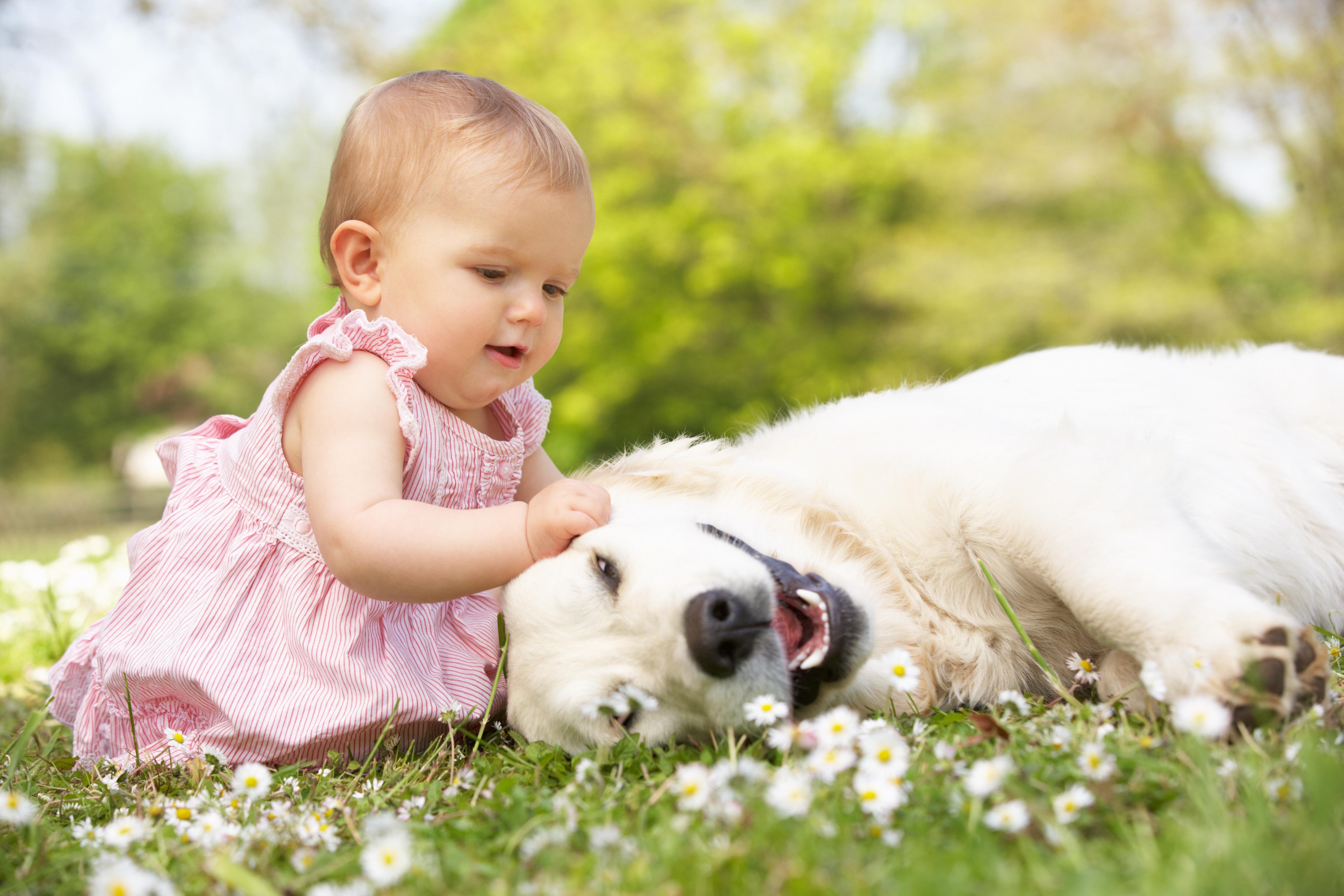 Картинки с животными для года