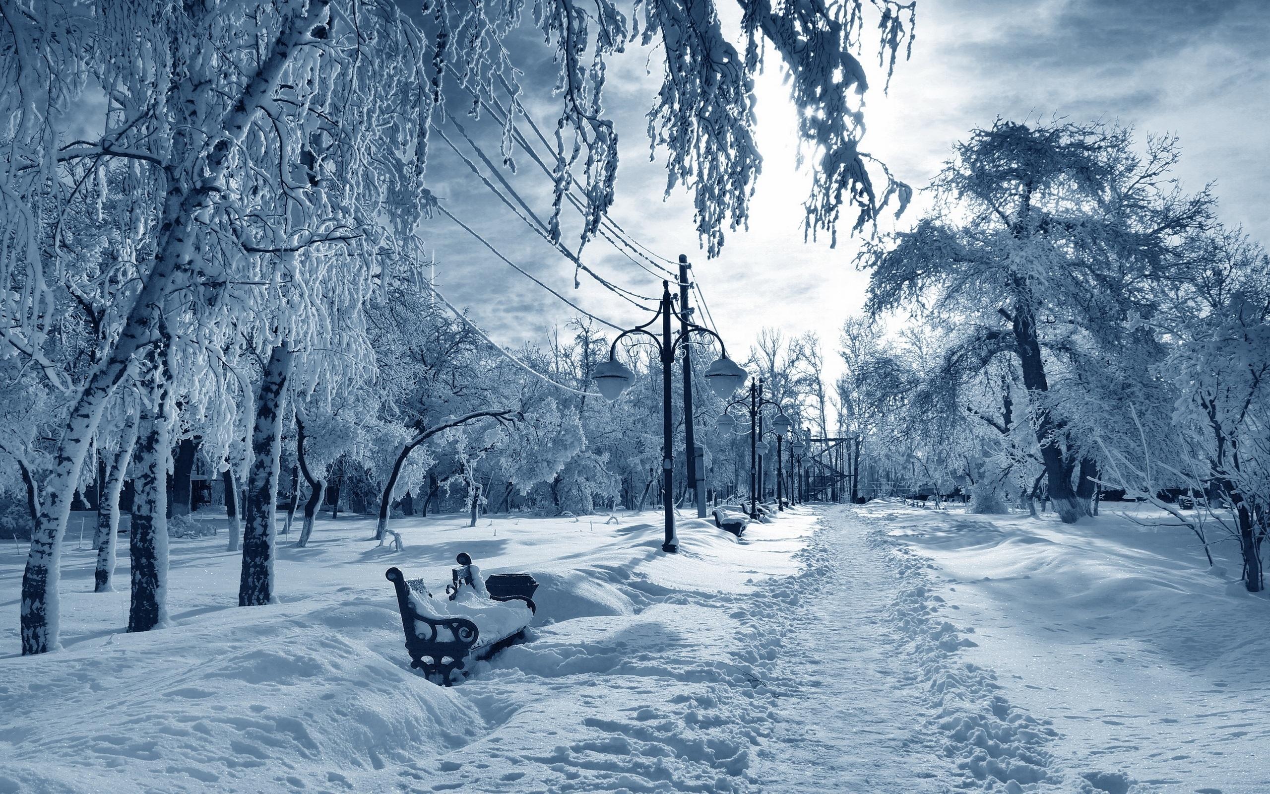 картинки зимний парк это