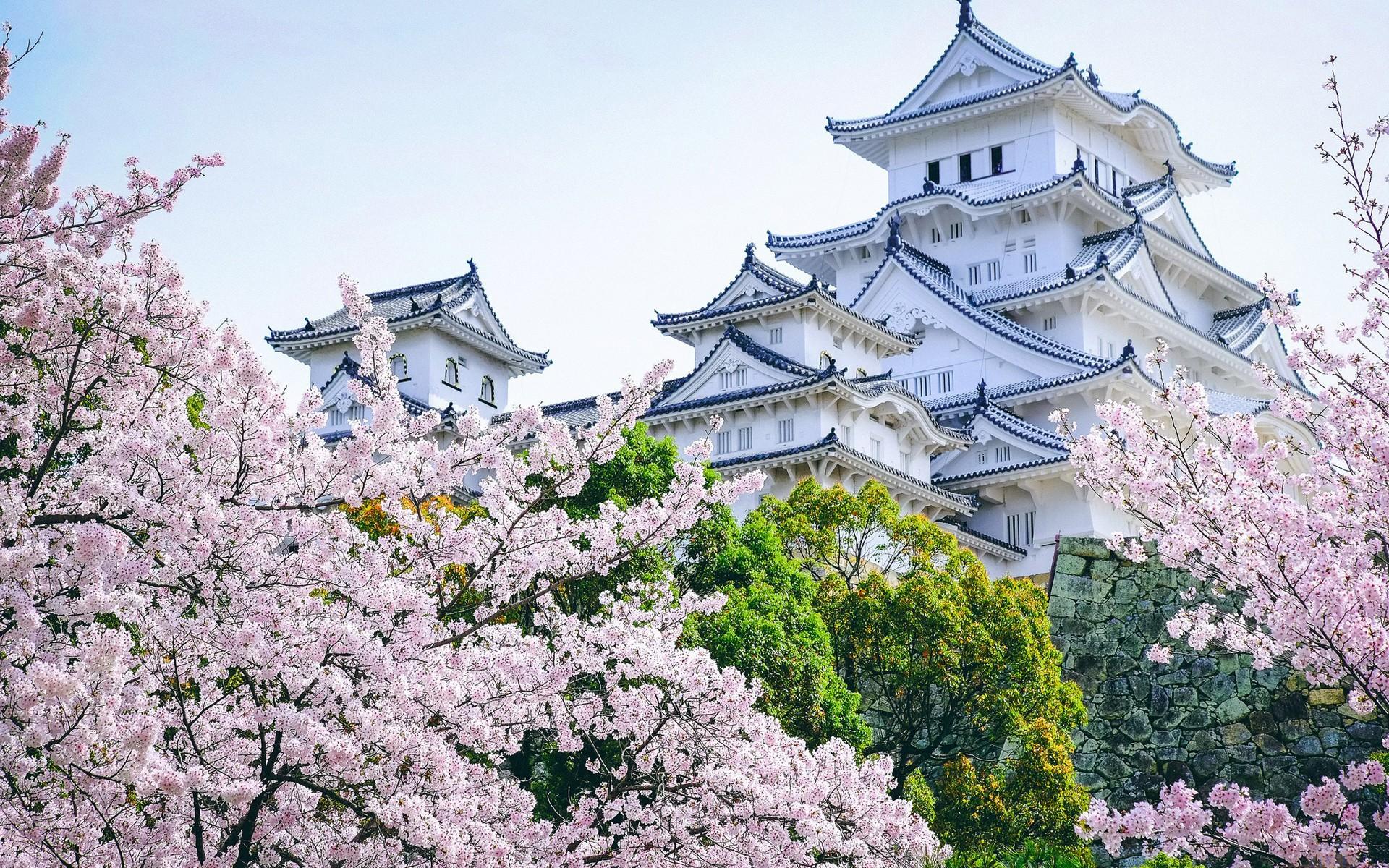 Японские картинки с сакурой