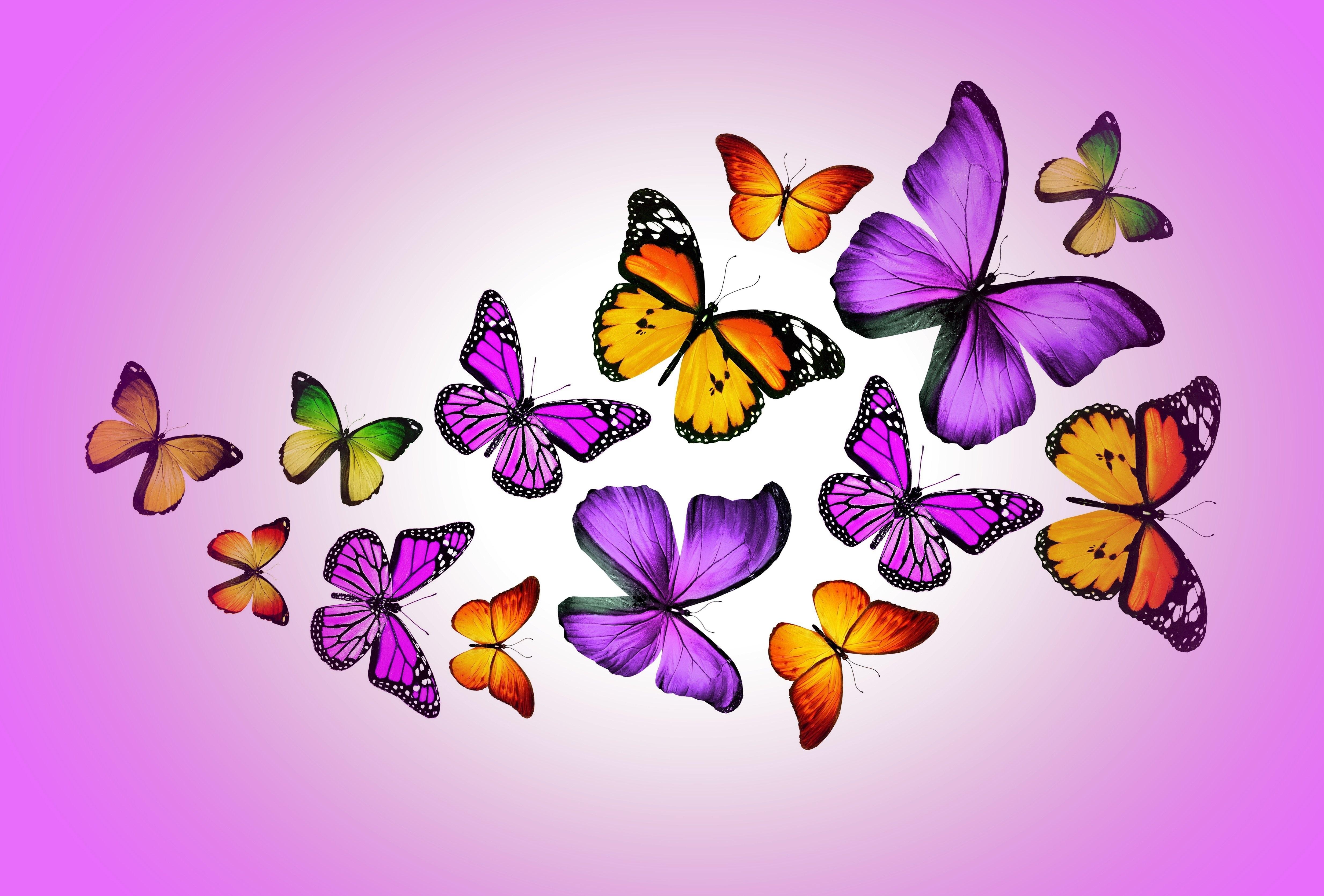 Бабочки картинки для открытки, маме дню учителя