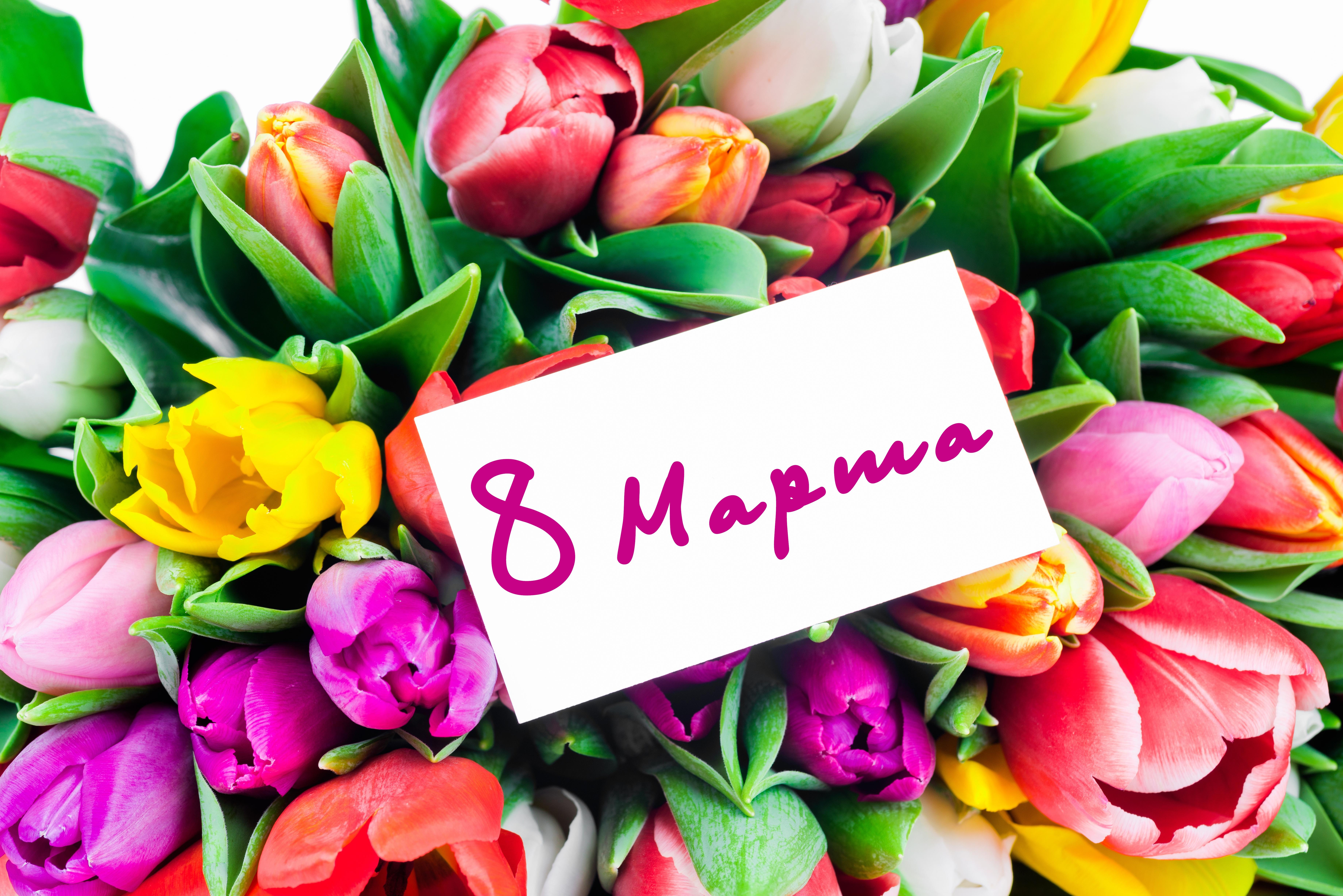 тесто поздравить с 8 марта тюльпаны утверждают список