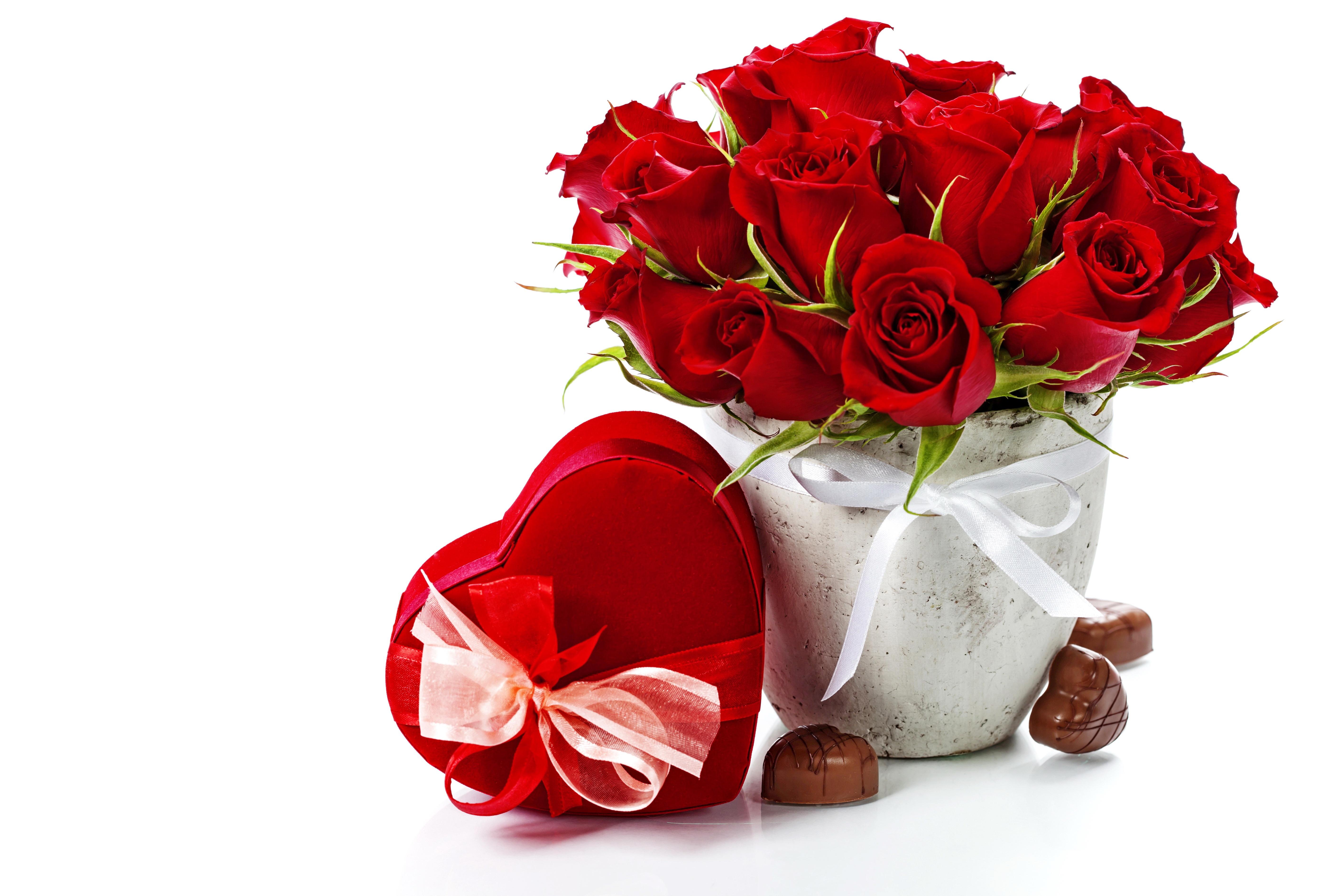 Цветы картинки для любимой девушки с надписями, настроение