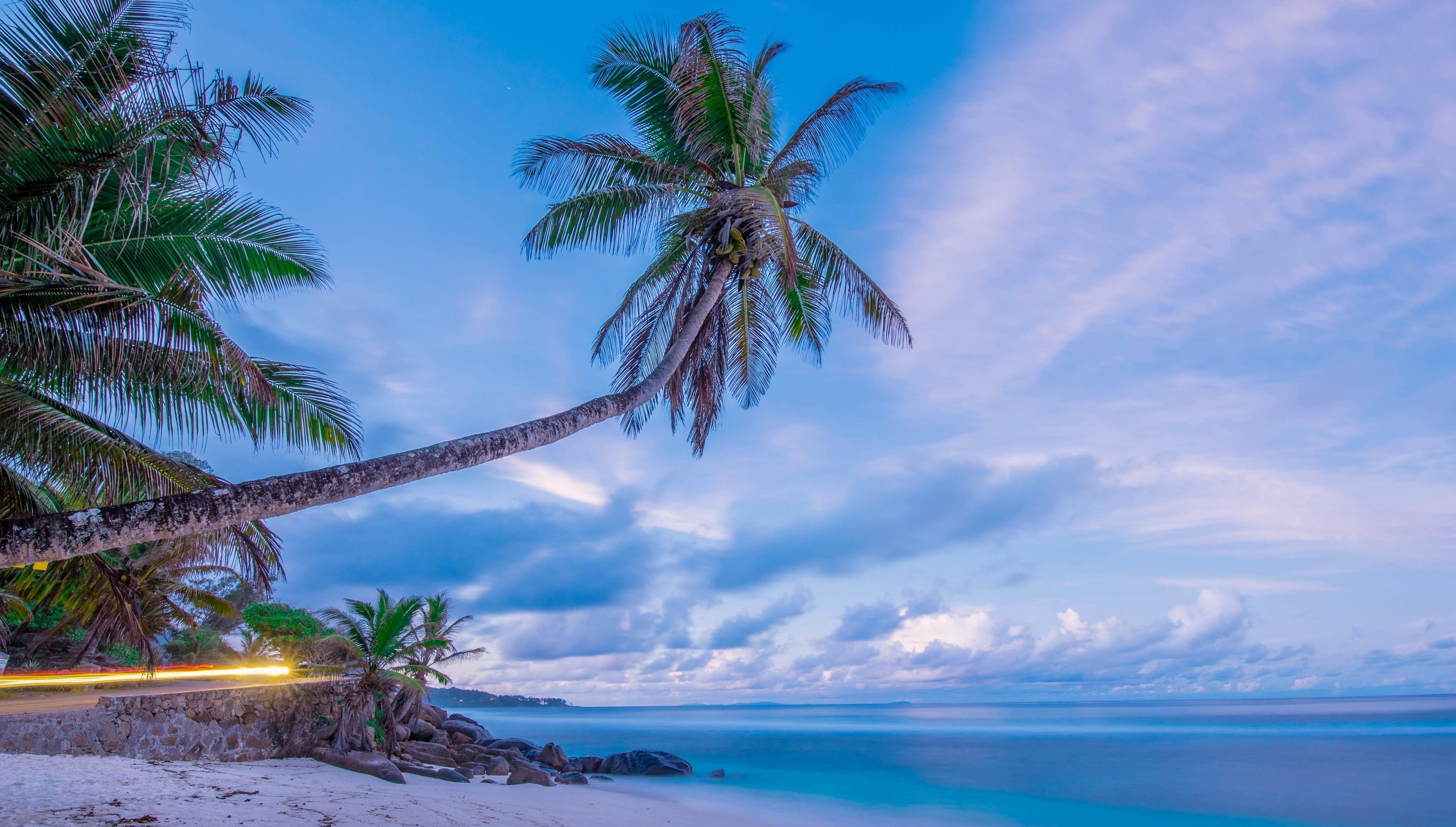 Картинка море с пальмами большого разрешения