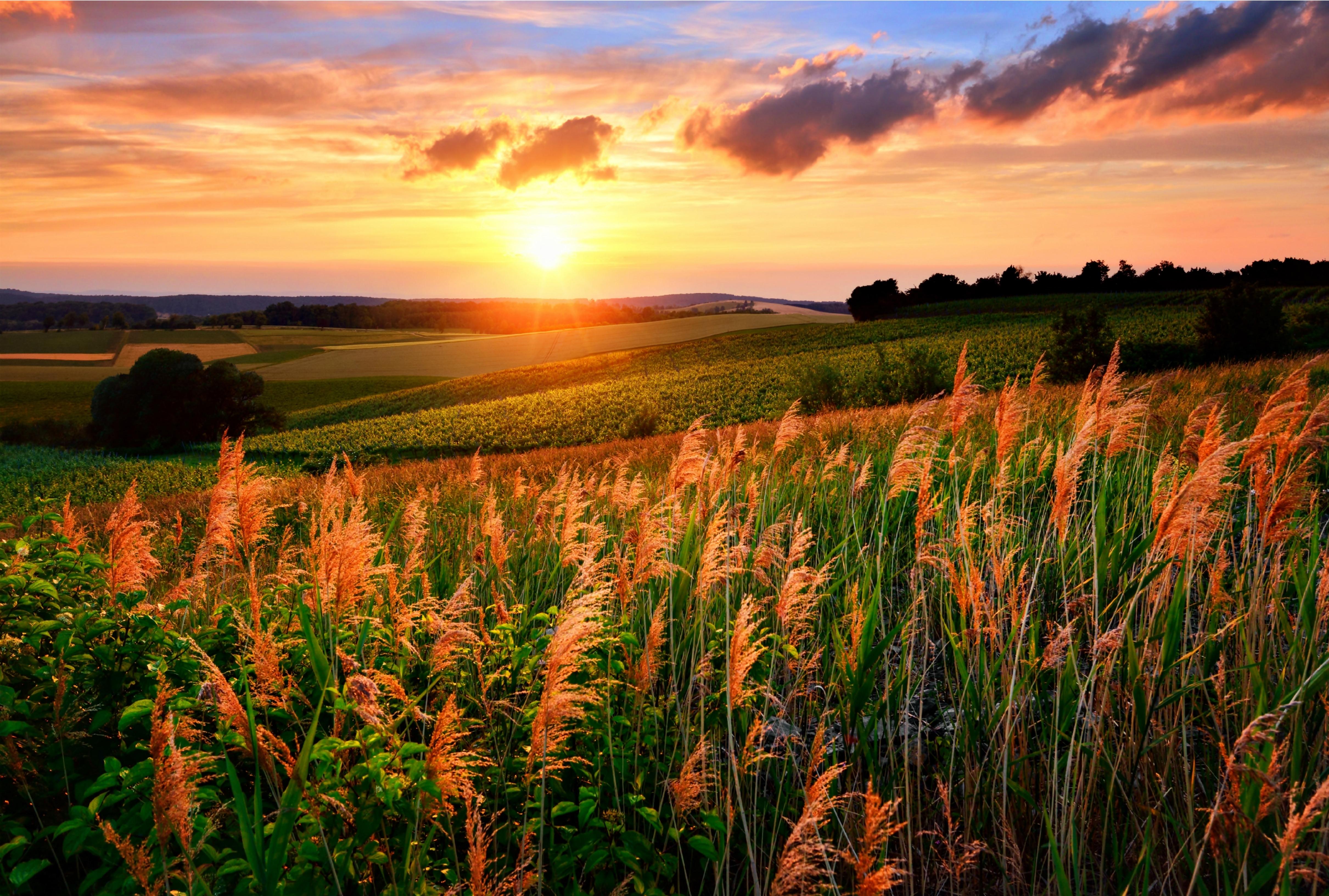 восход солнца в поле фото представляет