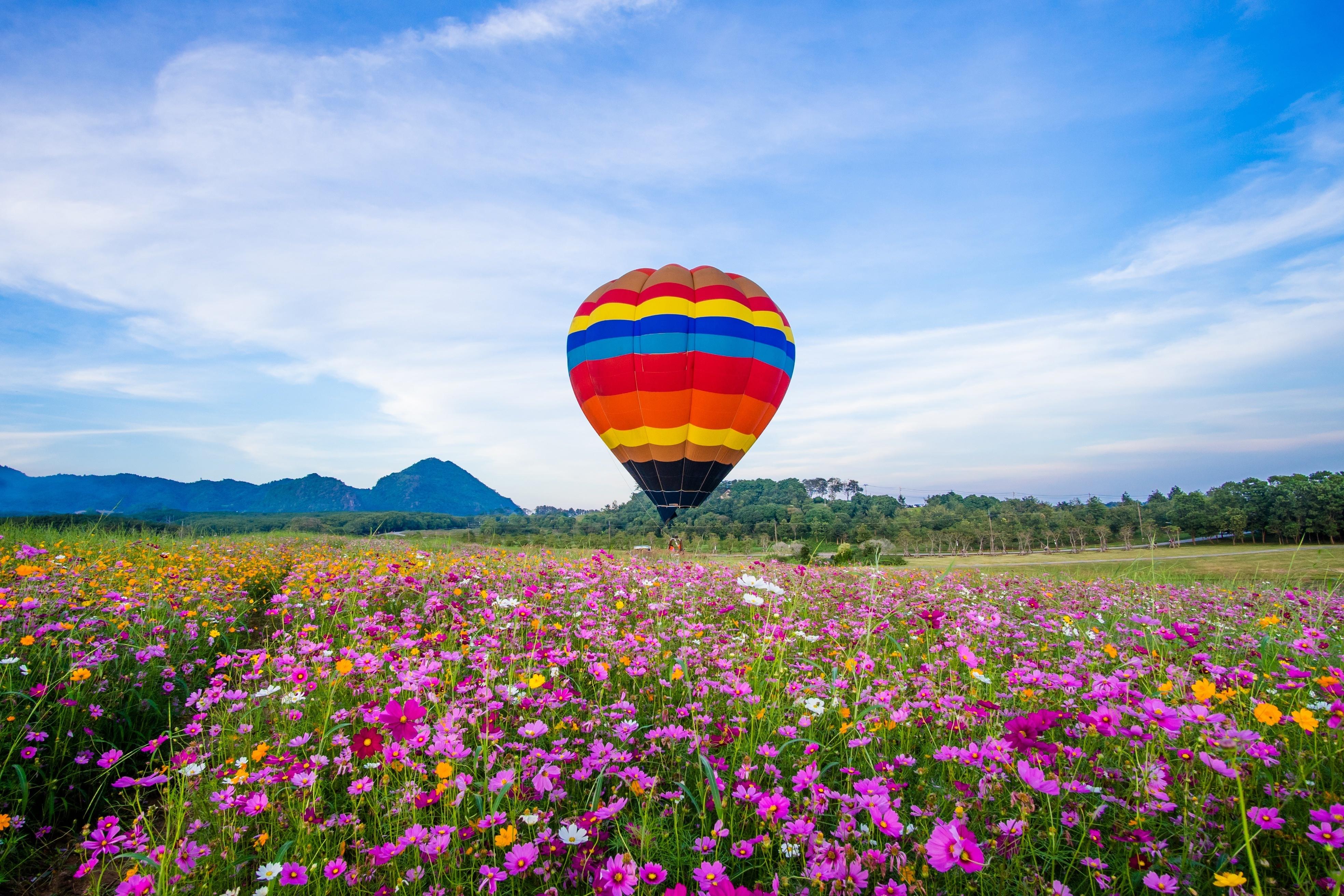 Картинки полеты над полем с цветами