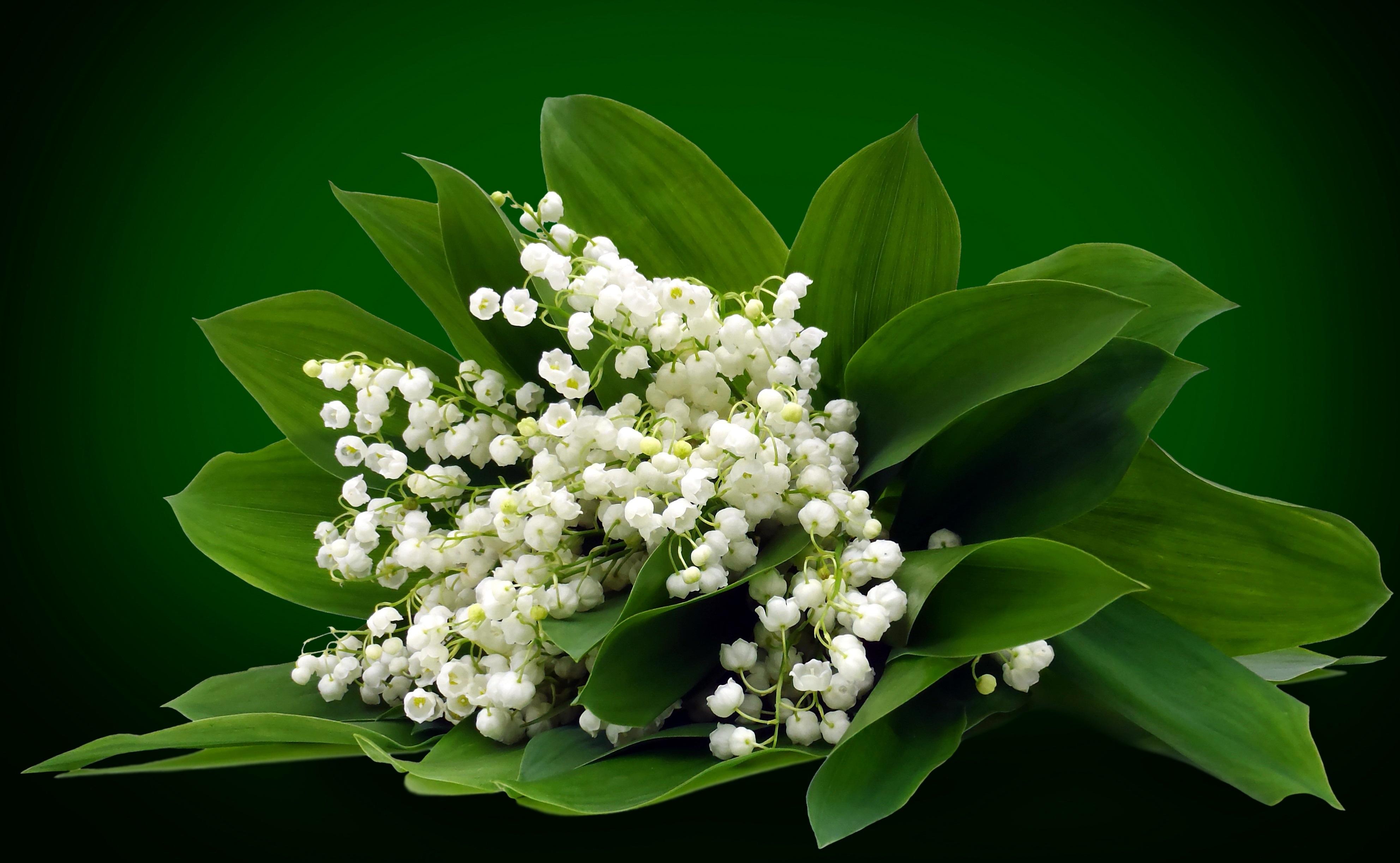 Оригинальные, открытка цветы ландыши