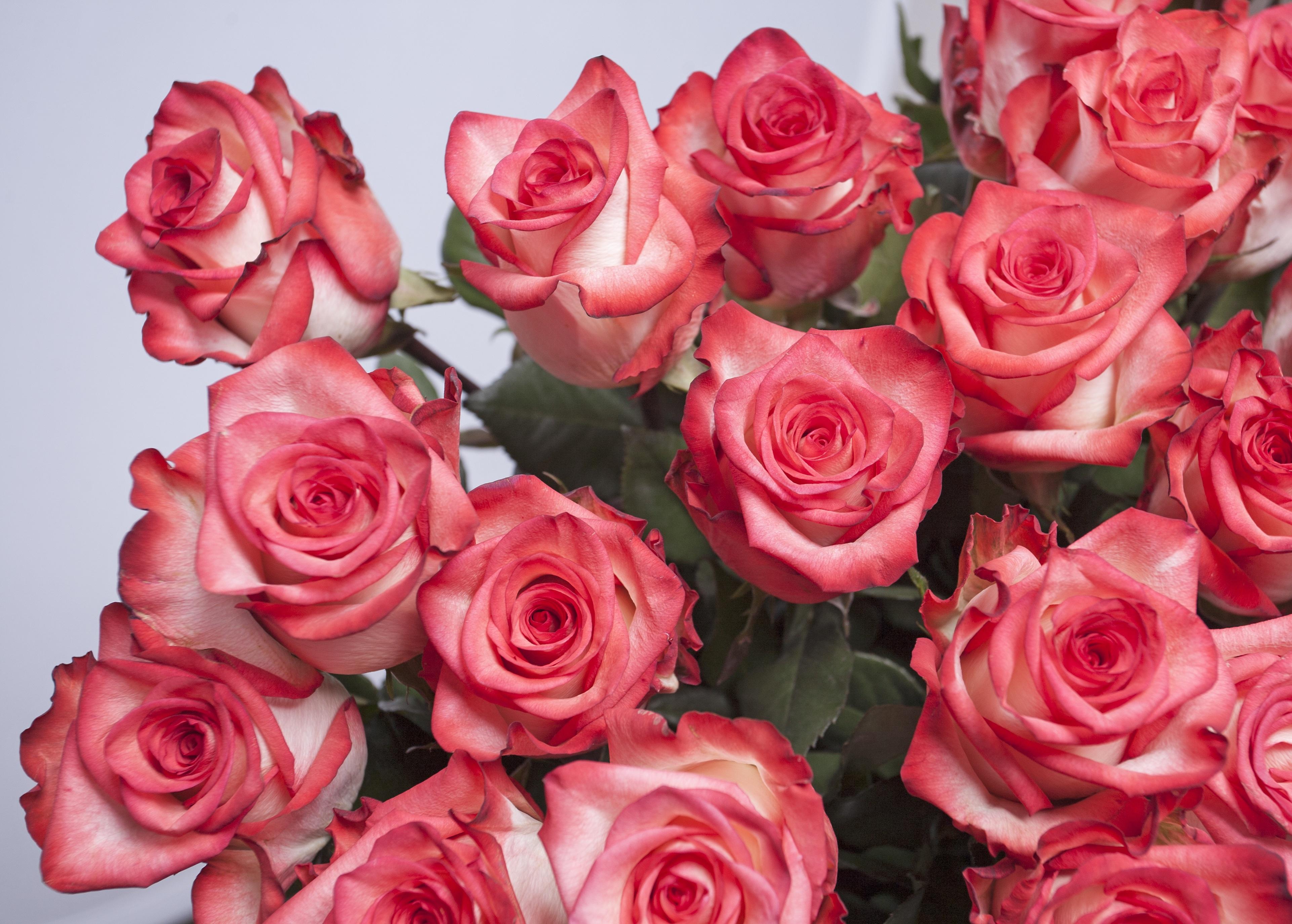 Глаза, обалденные розы для открытки