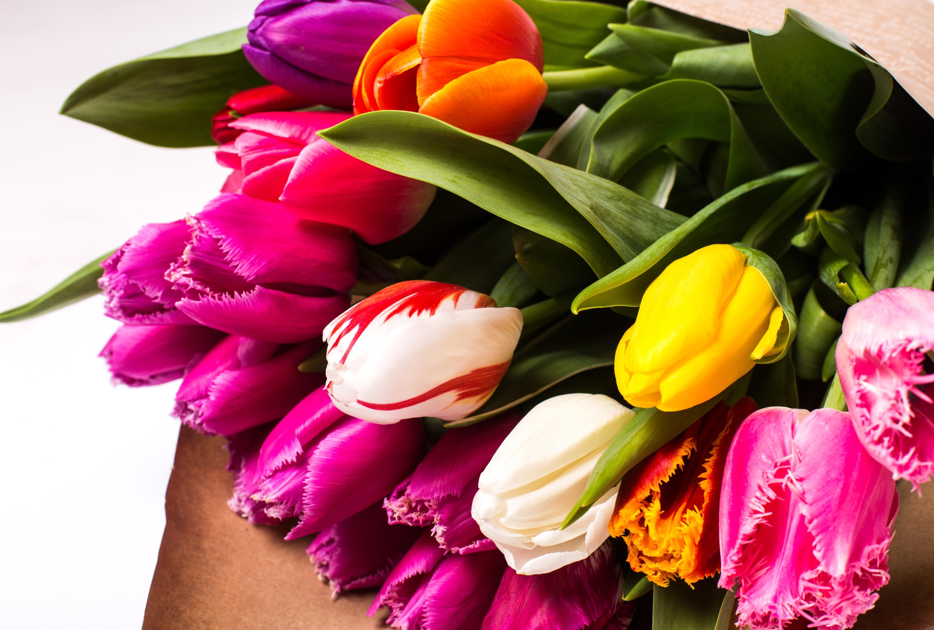 Поздравлений для, тюльпаны цветы картинки красивые