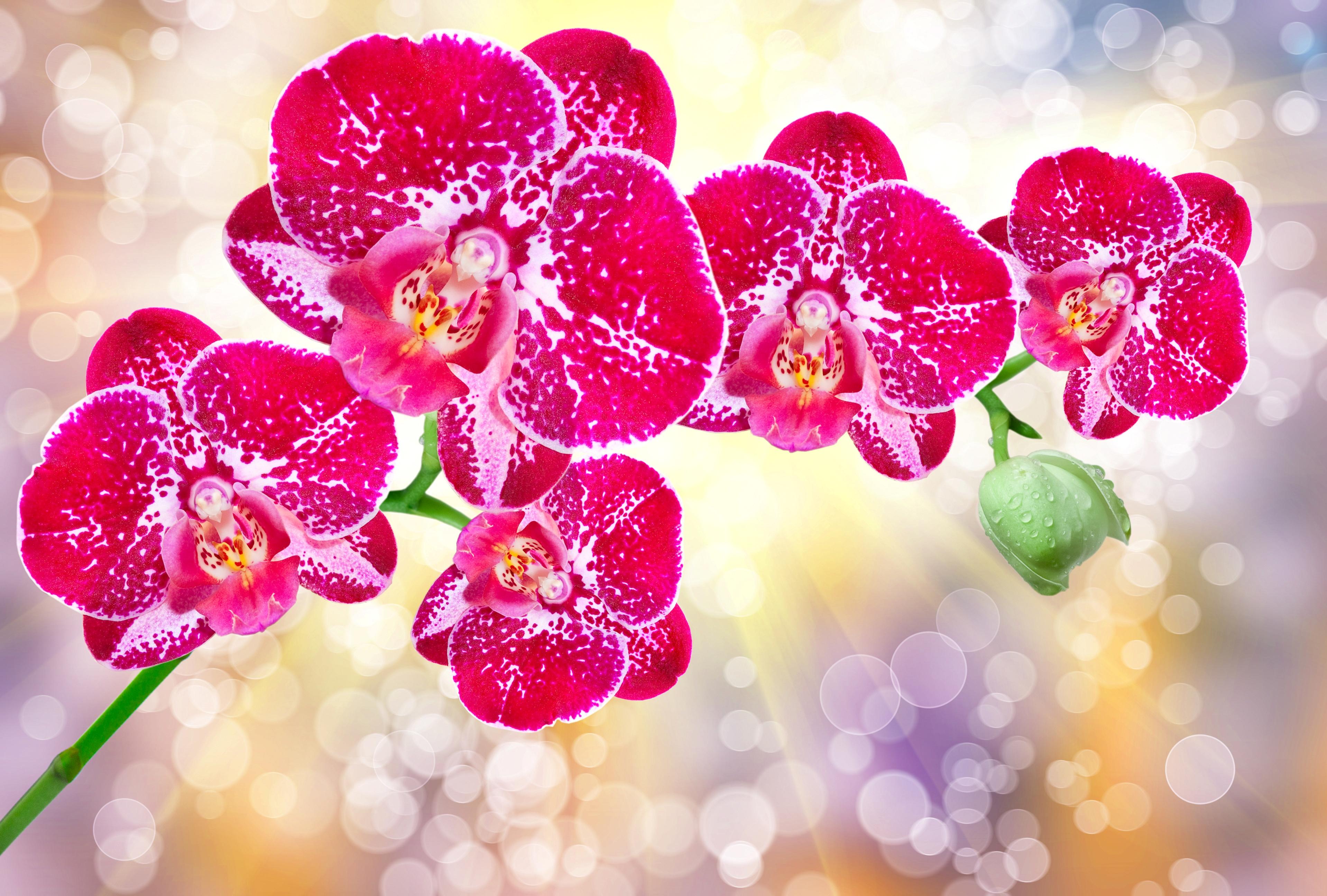 обязательно оцените фото цветов для печати высокого качества кто чему привык