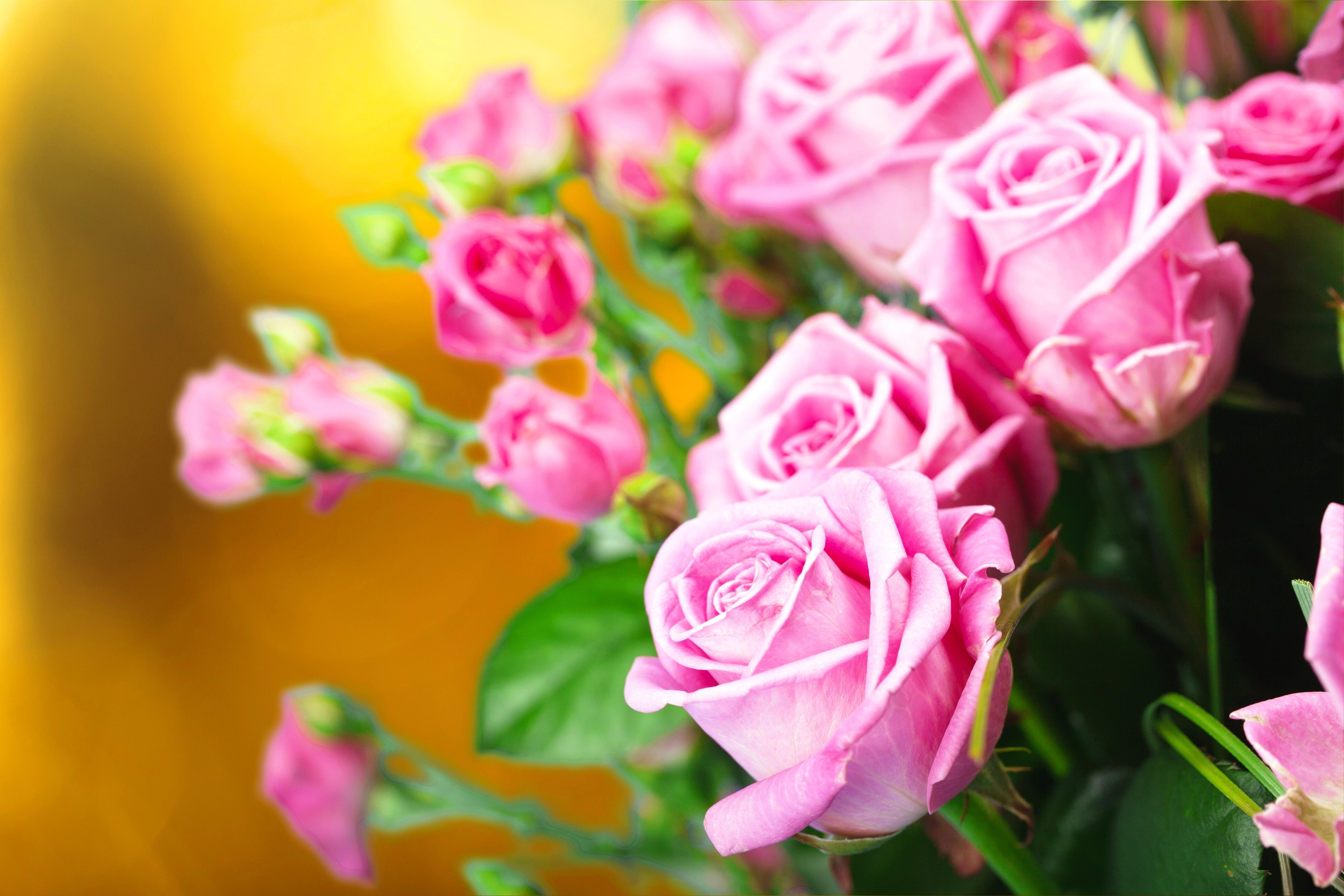 Картинки рабочий стол цветочки