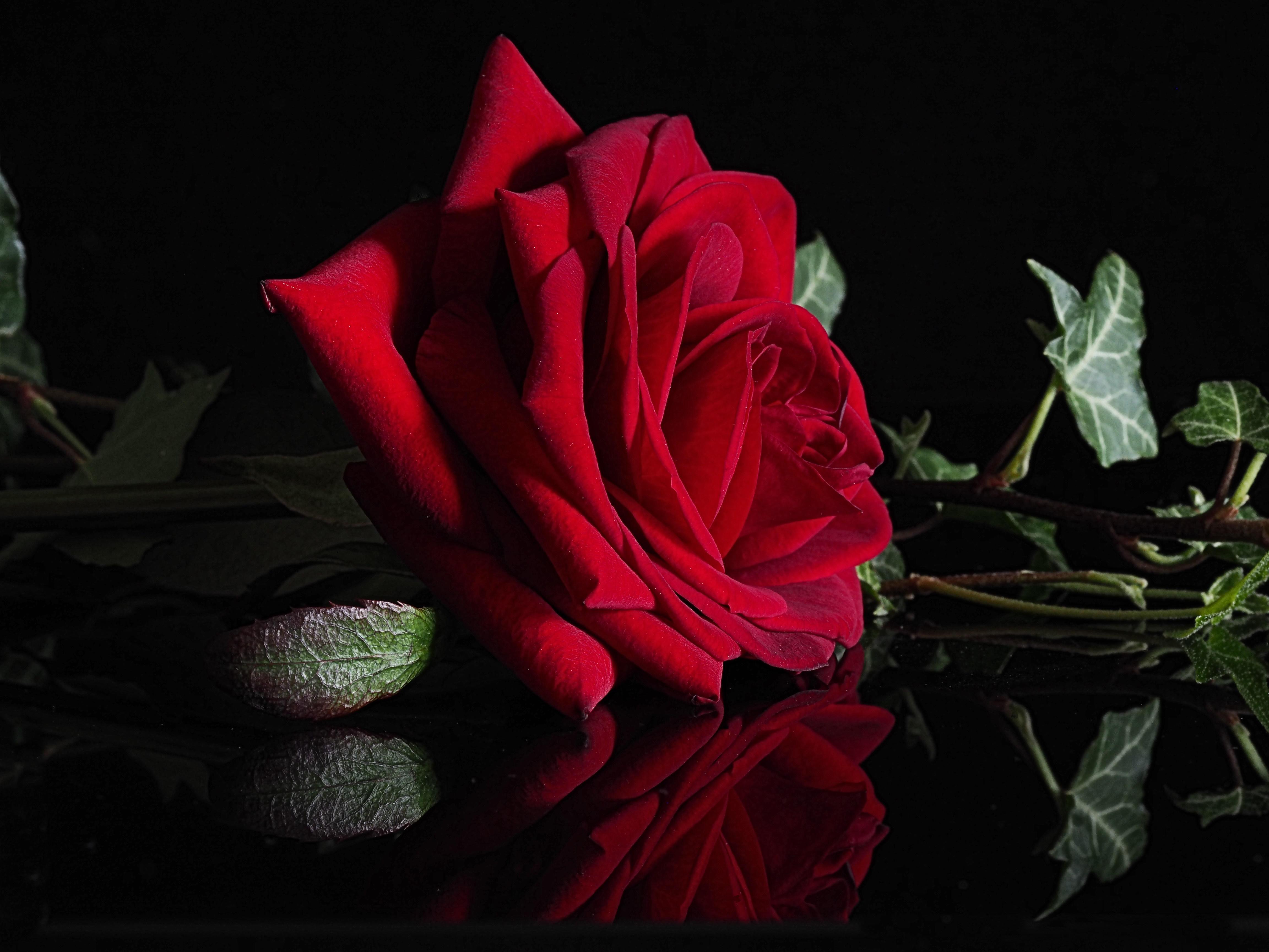 Картинки юмор, открытка темные розы
