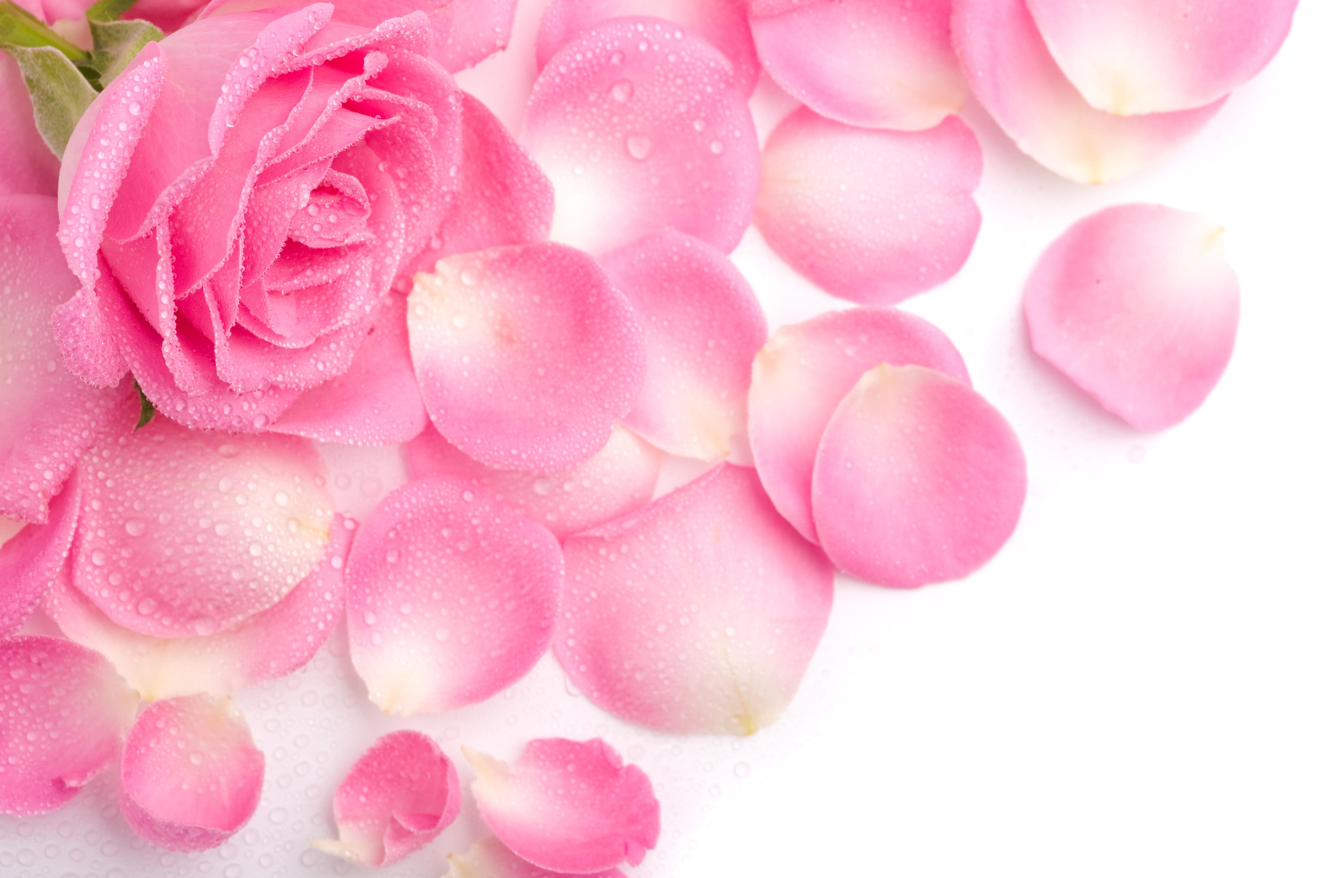 Розовые открытки, вечера