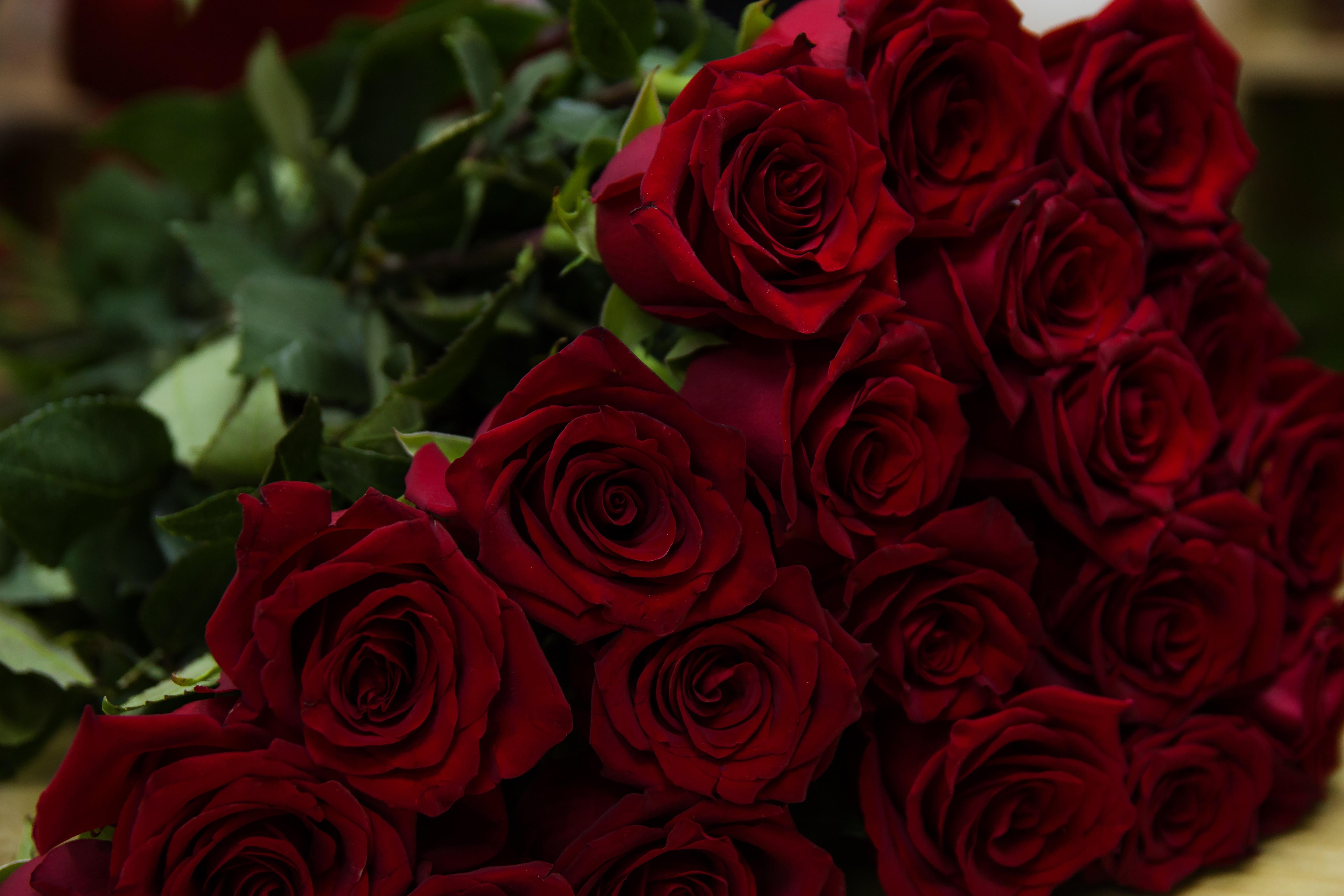 Овечками новый, картинка с розами красными