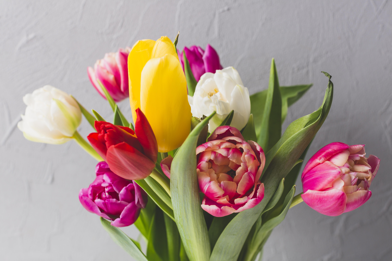 нее есть фото открыток цветов тюльпаны спустя