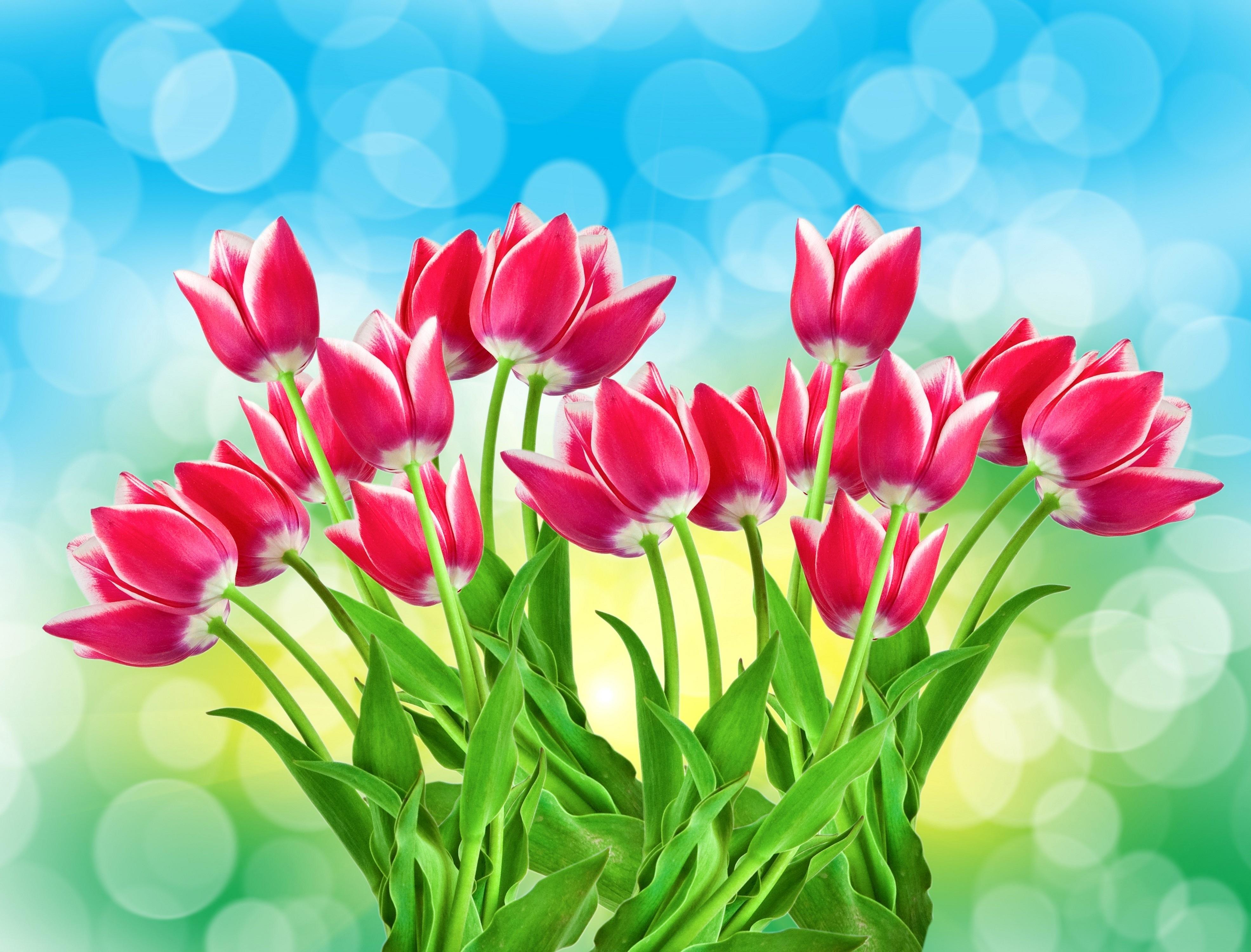 Открытки цветами тюльпаны, картинки
