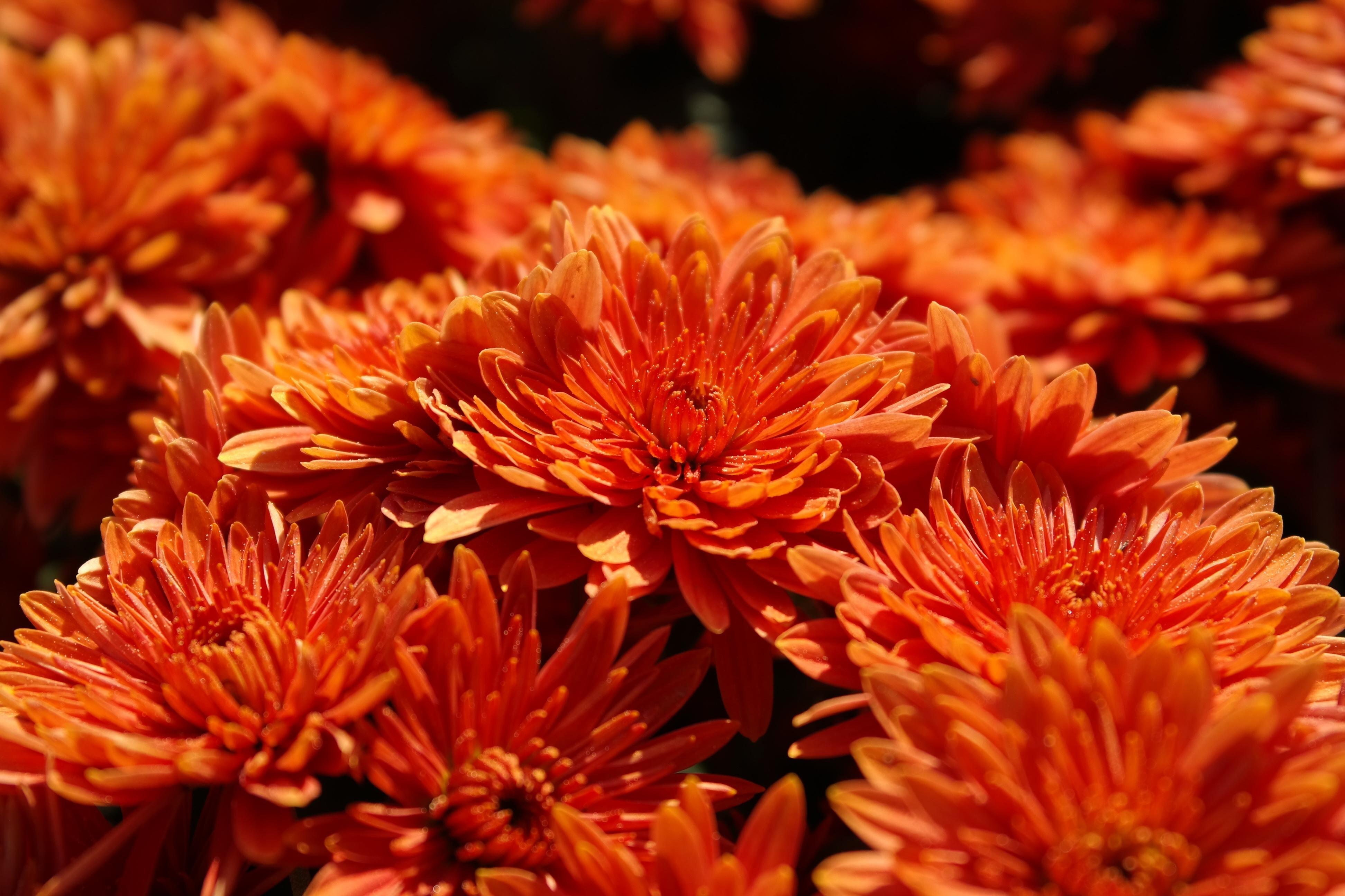осенний цветок фото арт очертания