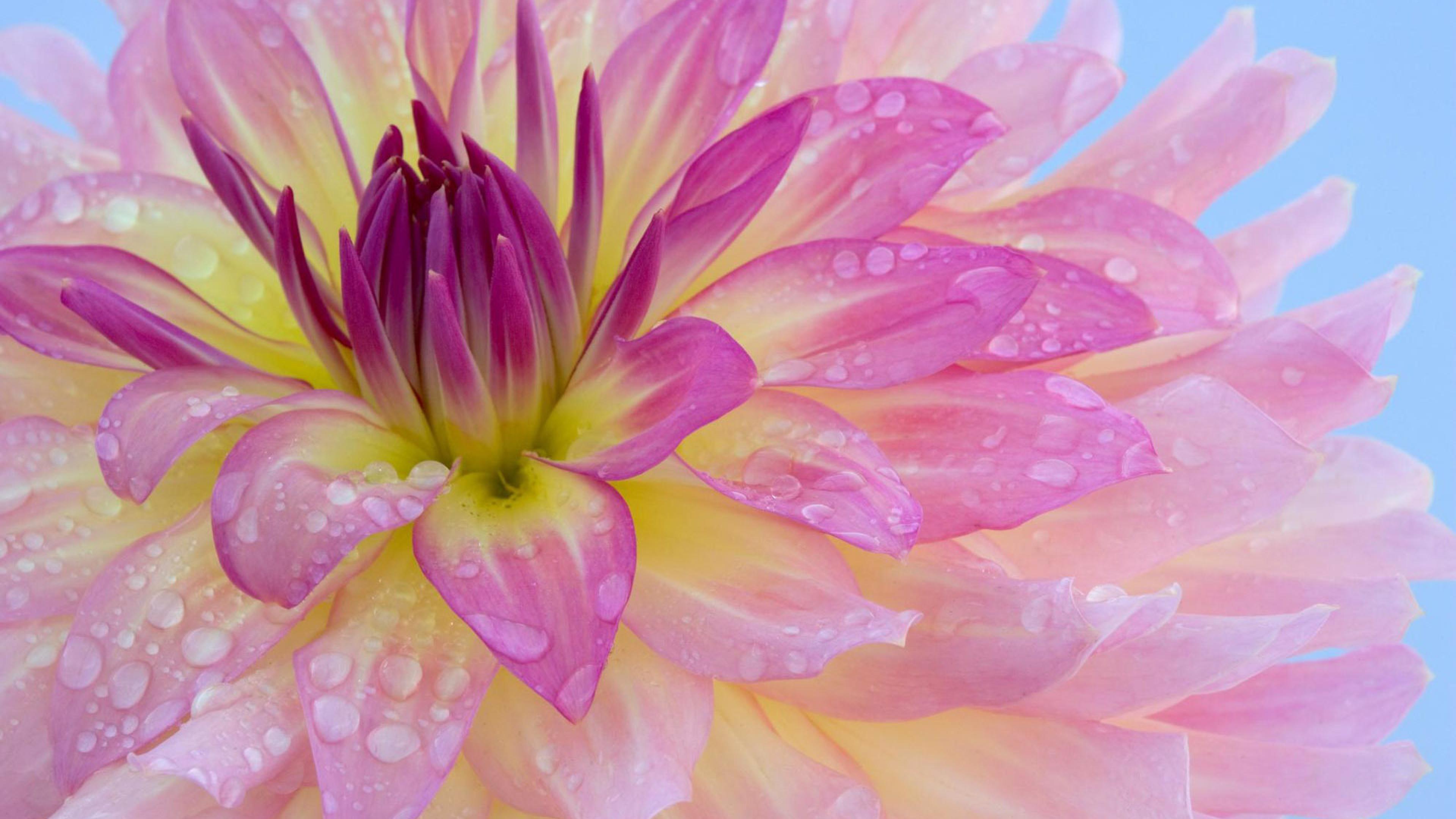 Красивые картинки цветов на рабочий стол