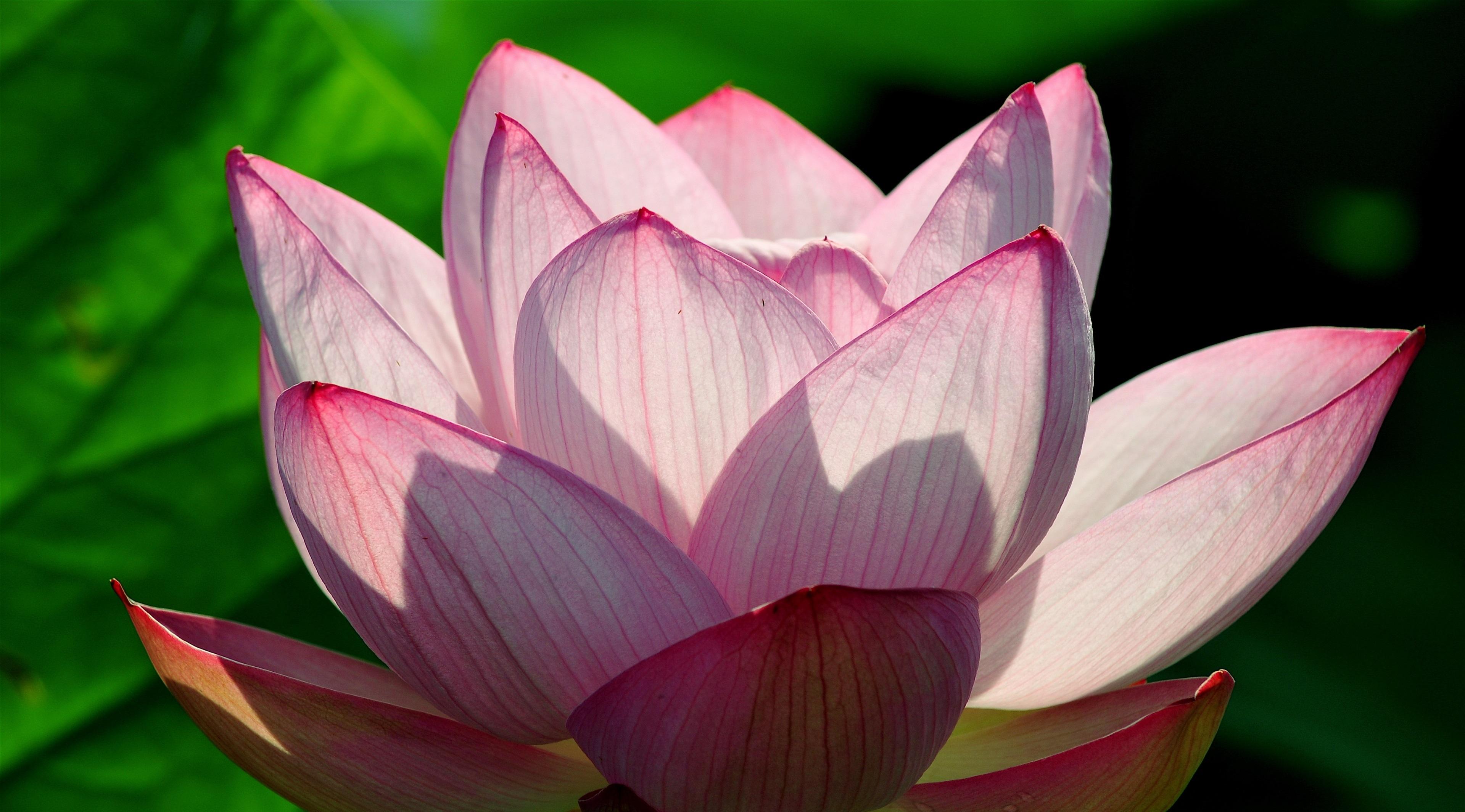 лиза, поздравляю фото экзотических цветов высокого разрешения касается уличных