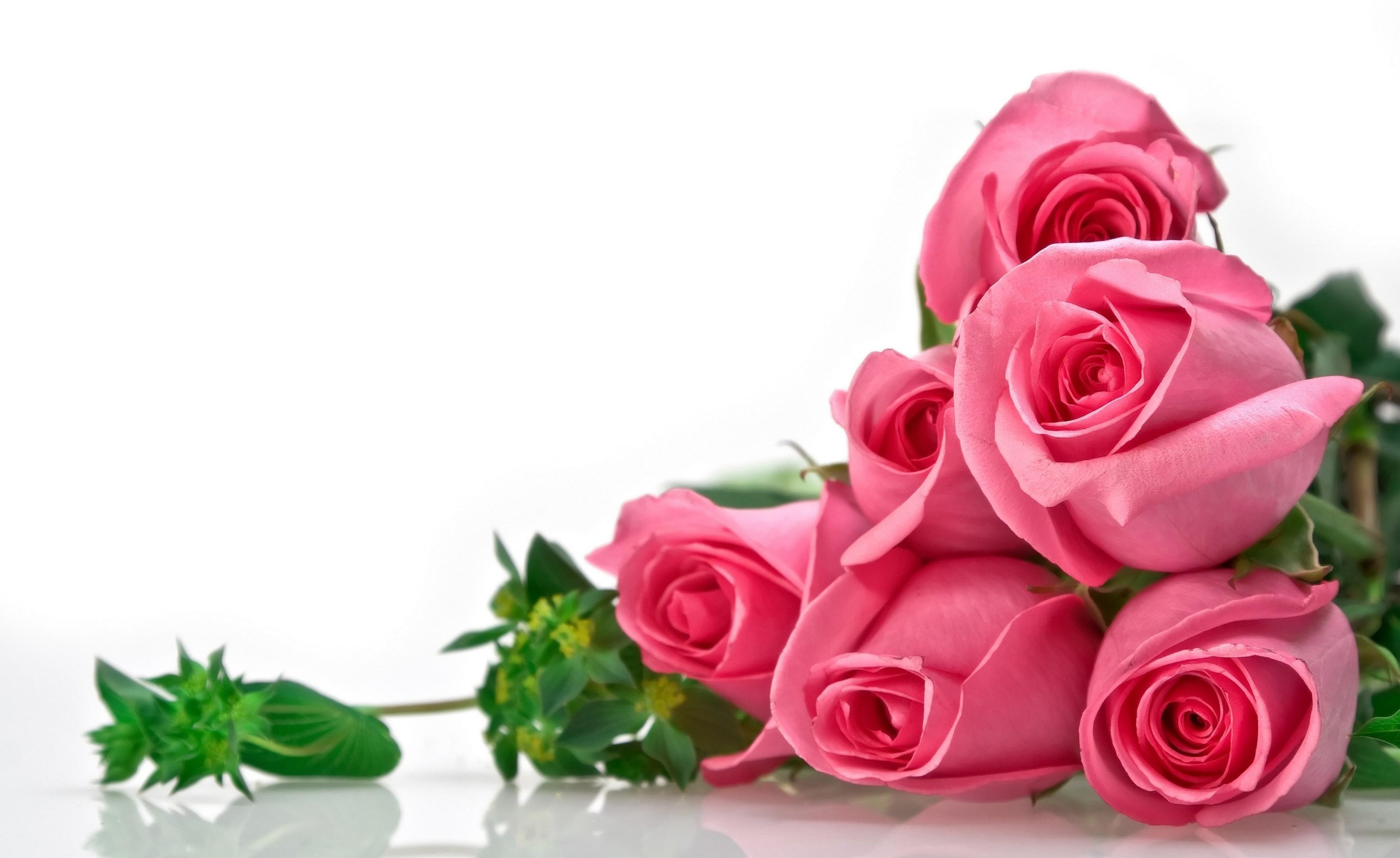 обеспечивает цветы для поздравительной открытки фото