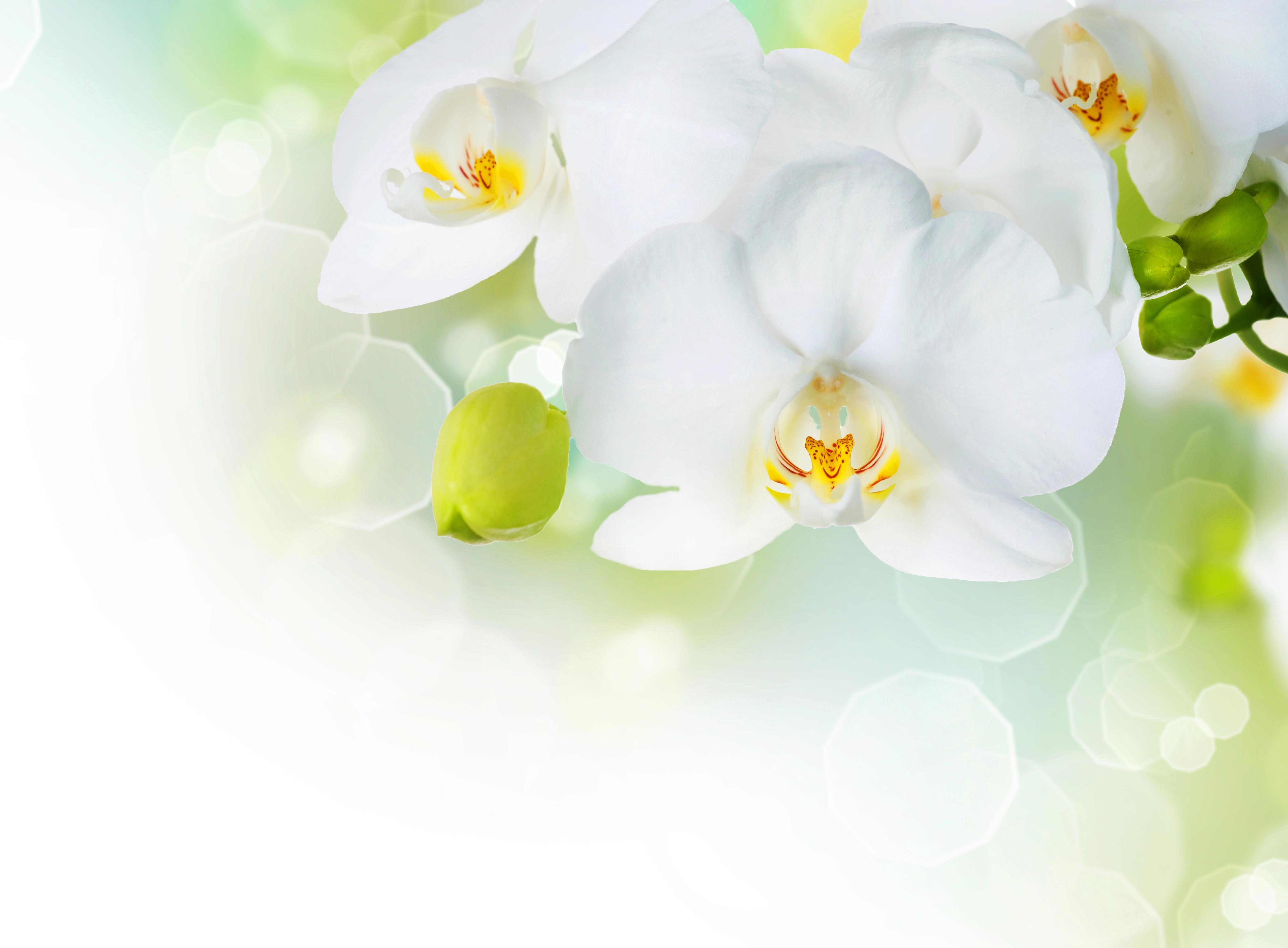 открытка с белыми орхидеями цветы сетку можно