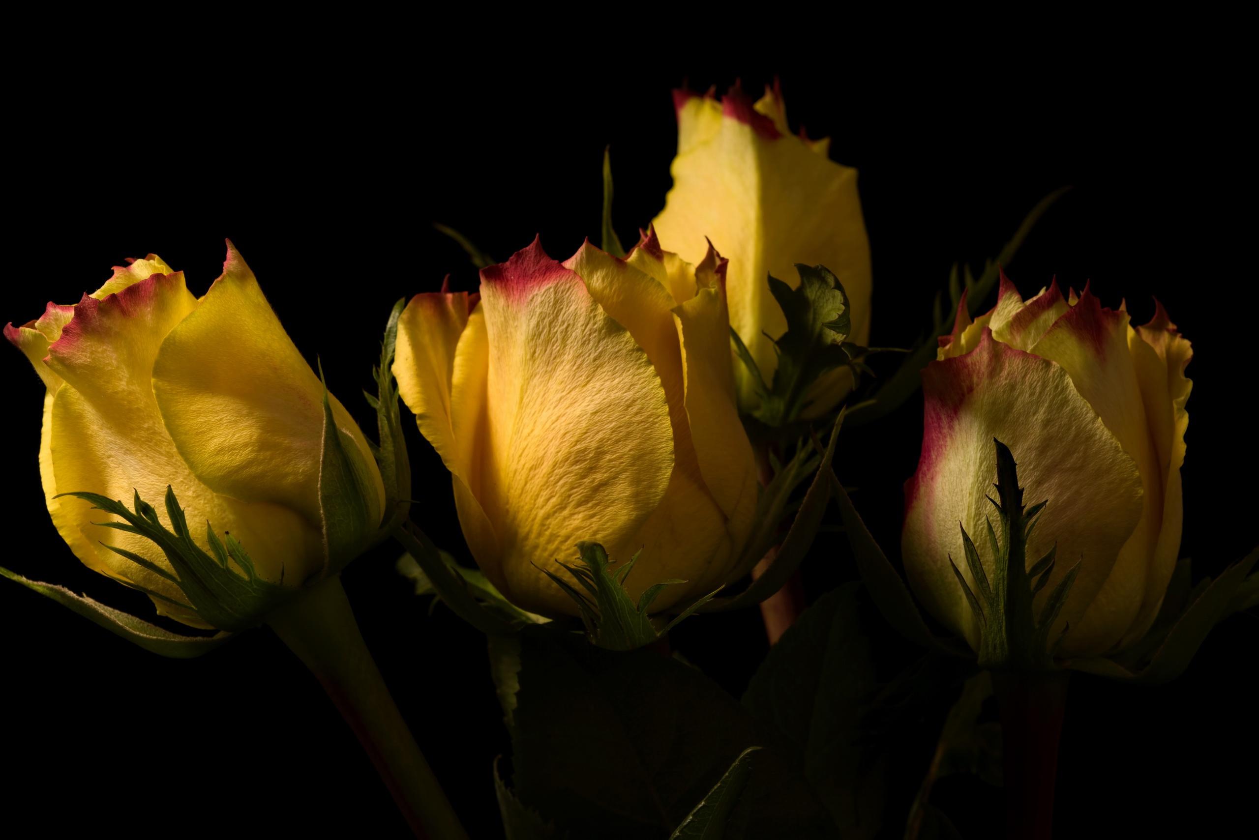 Цветы фото траур желтые