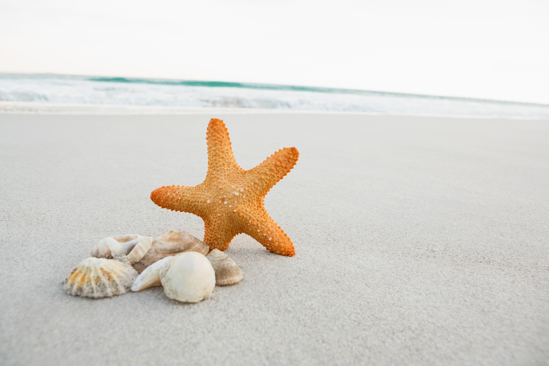 картинки с песком и ракушками победы турции