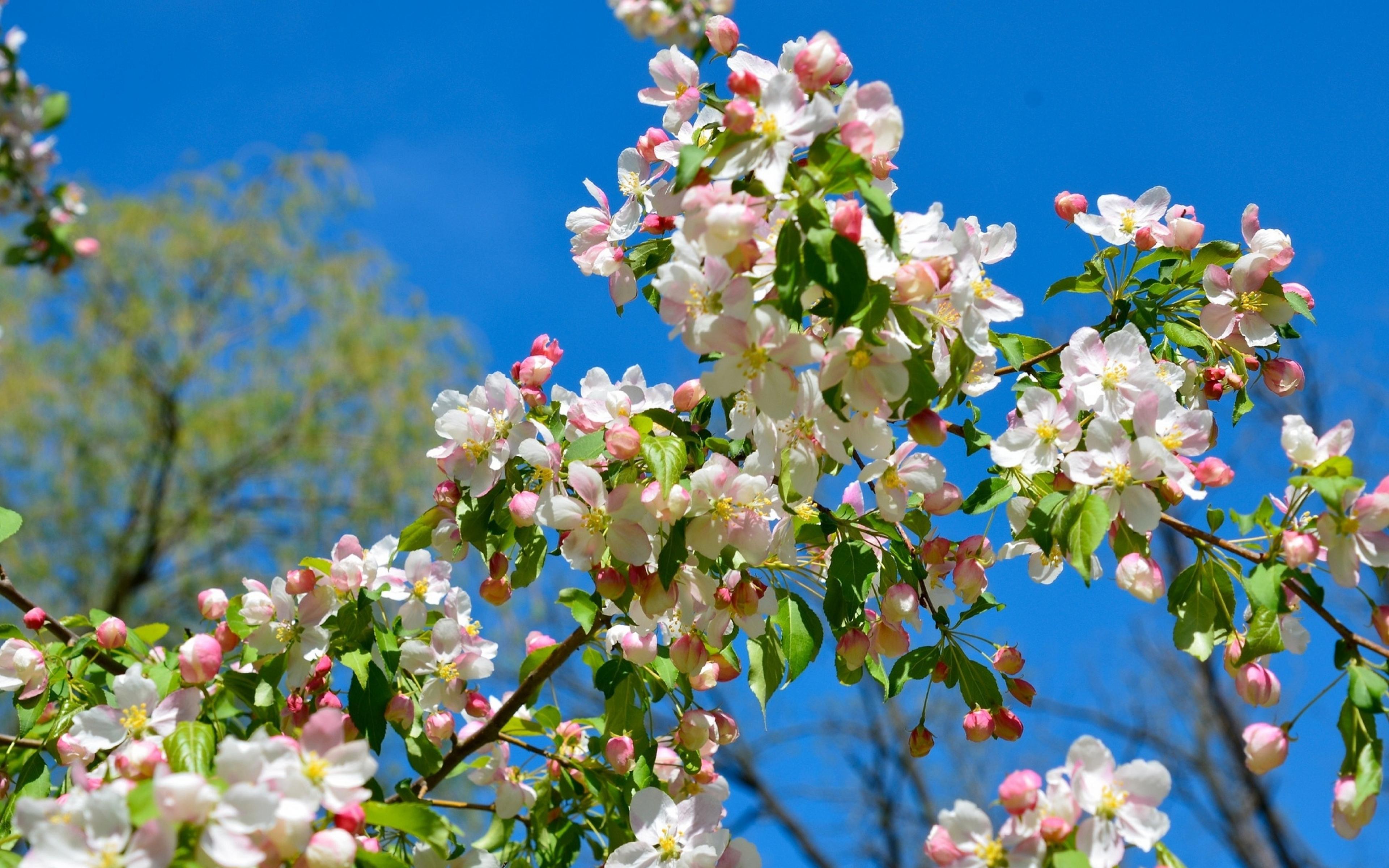 spring wallpaper free - HD1600×1060
