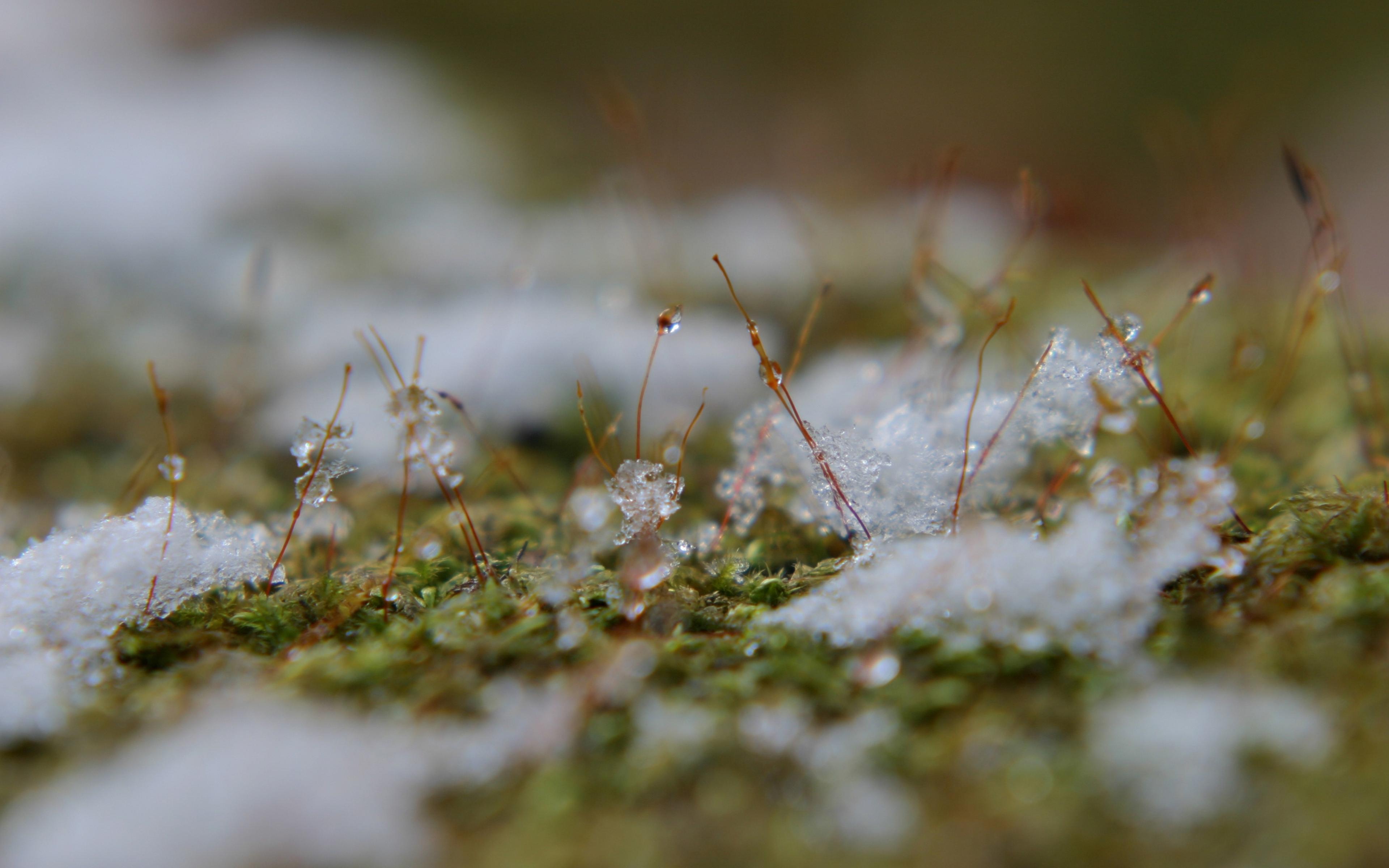 весенний снег картинки угрей